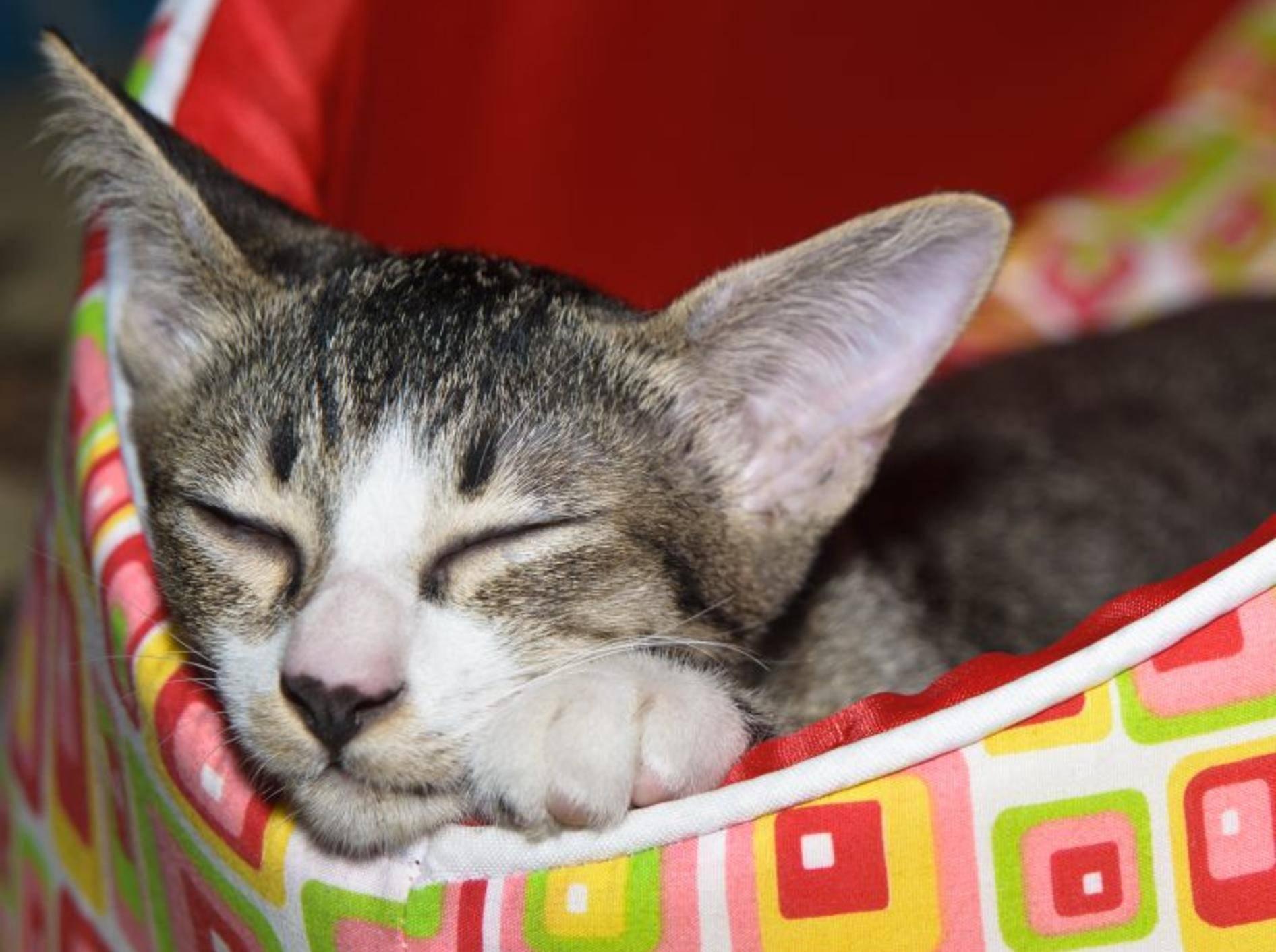 Die kuscheligsten Katzenbetten – Bild: Shutterstock / JeepFoto