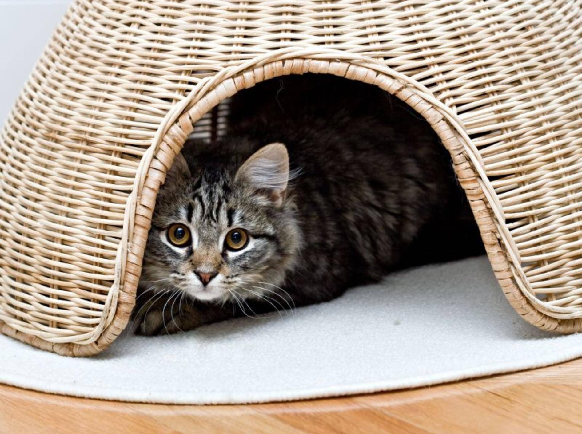 Verstecken macht Spaß: Vier schöne Katzenhöhlen – Bild: Shutterstock / Alon Brik
