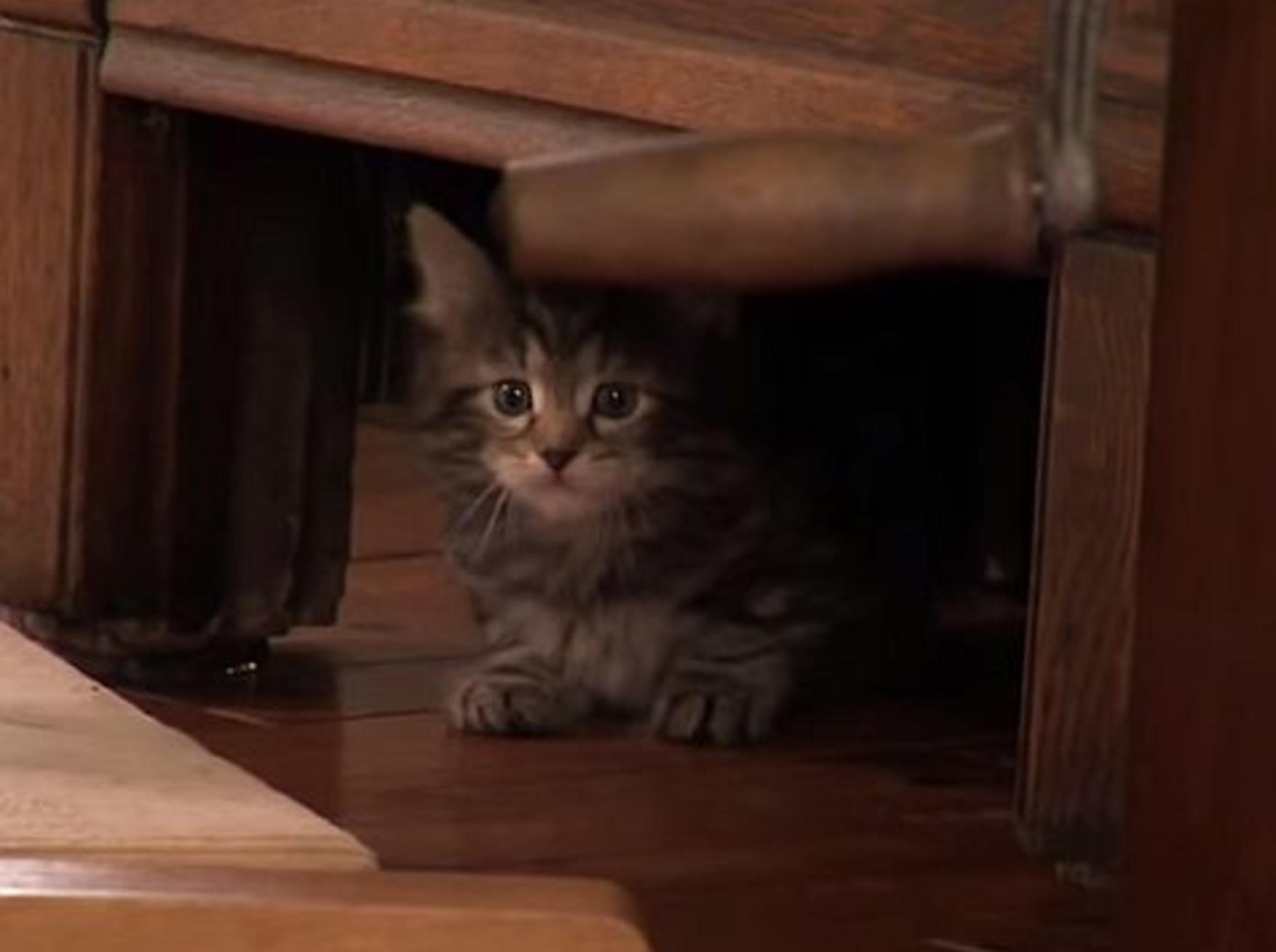 Wie süß: Kleine Katze auf großer Klettertour – Bild: Youtube / Animal Planet