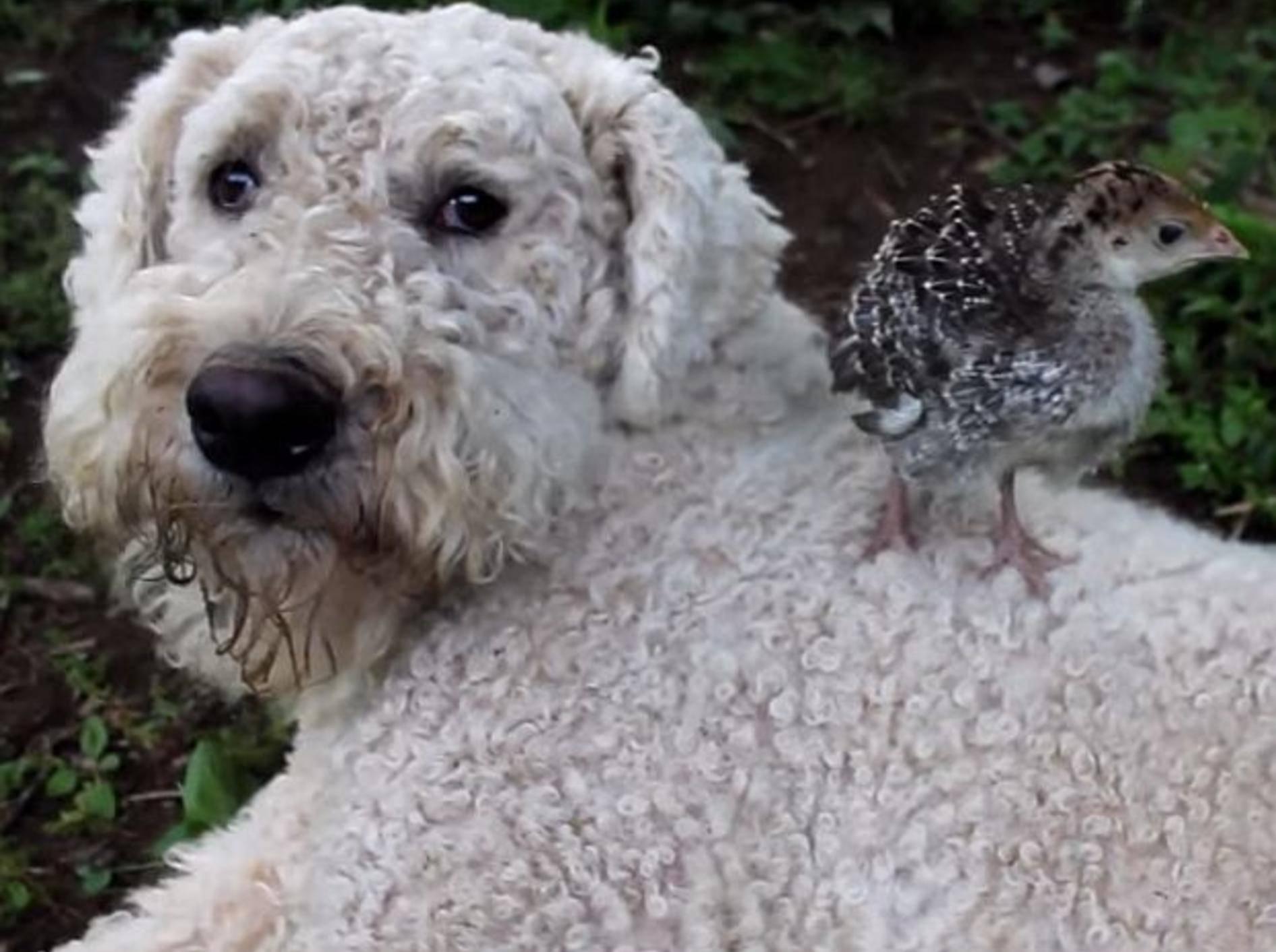 Zwei tierische Babysitter jobben auf dem Bauernhof – Bild: Youtube / Lil'Critterz