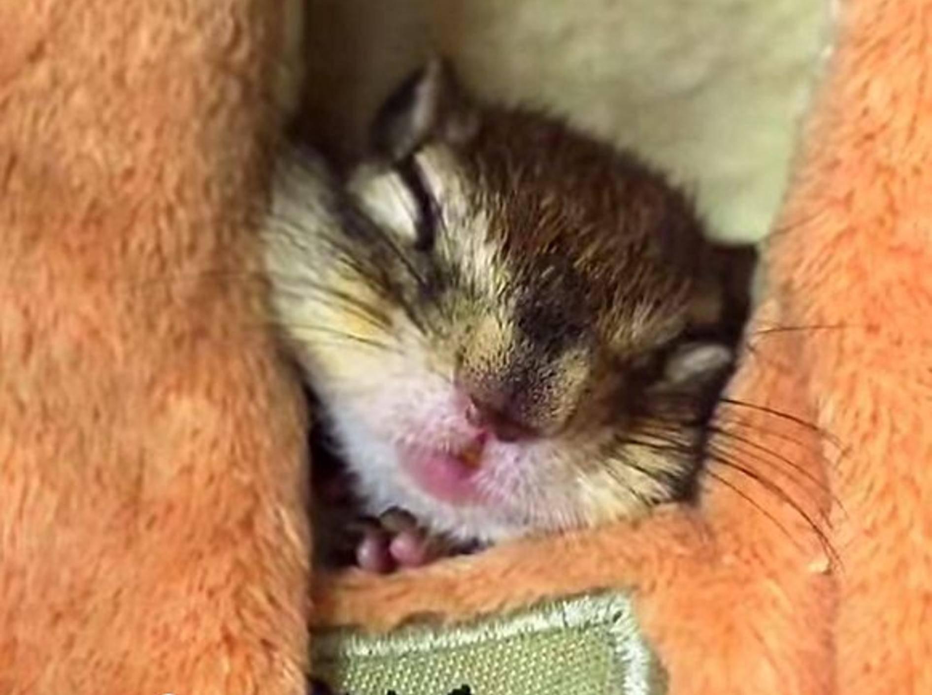So müde, kleines Streifenhörnchen? – Bild: Youtube / bikke the chip