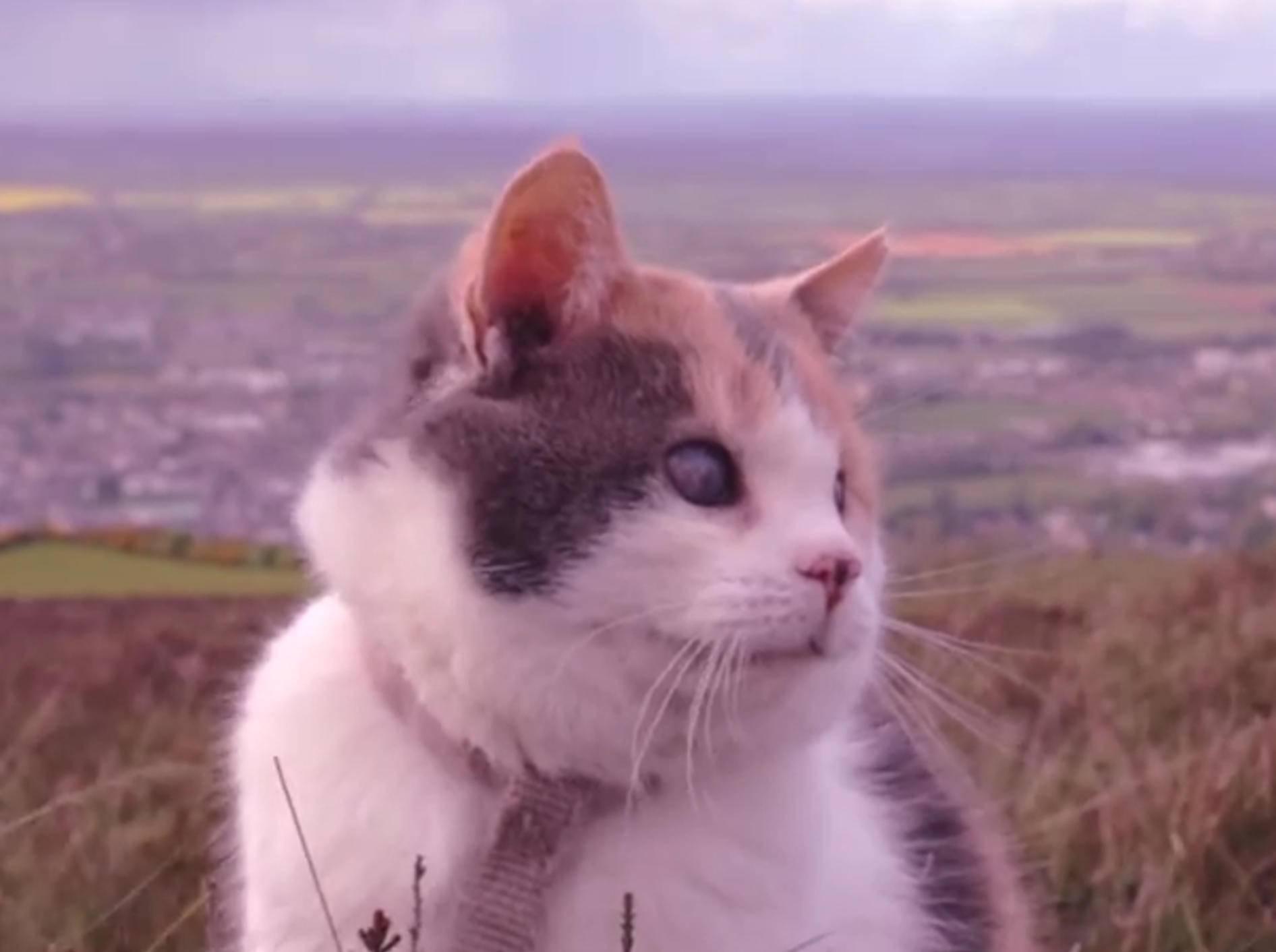 Herzergreifend: Blinder Kater Stevie auf Wanderung – Bild: YouTube / Patrick Corr