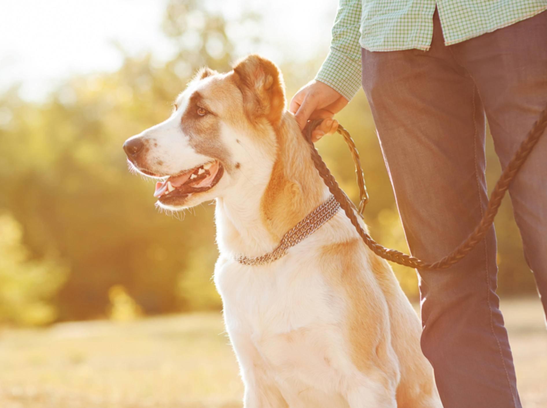 Beim Hundespaziergang sollten Sie ein paar Grundregeln beachten - Bild: Shutterstock / Rock and Wasp