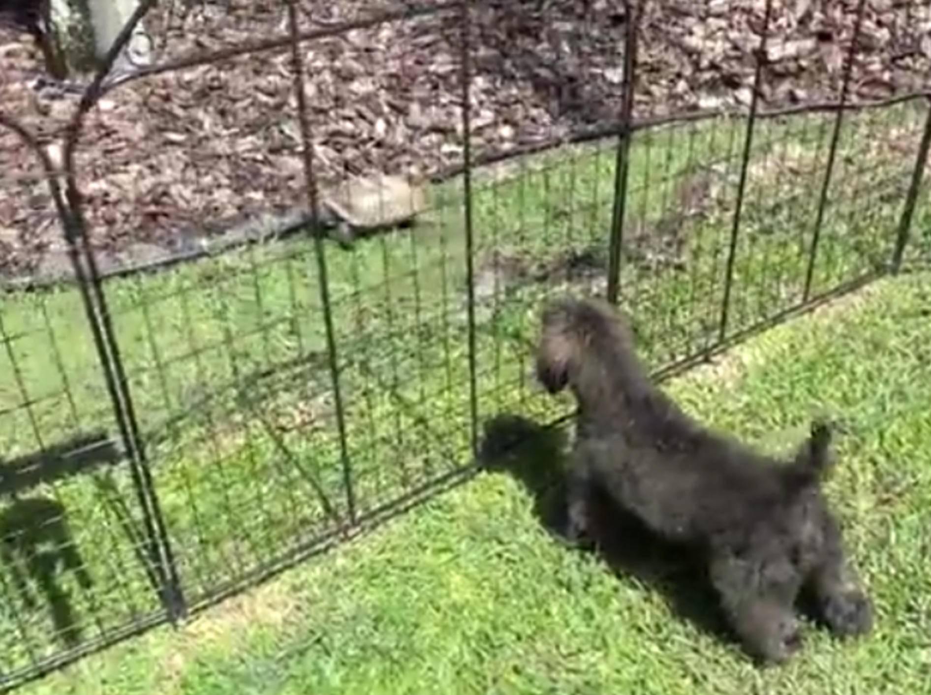 """Hund bellt Schildkröte an: """"Das ist mein Revier!"""" – Bild: YouTube / Nerd Plays"""