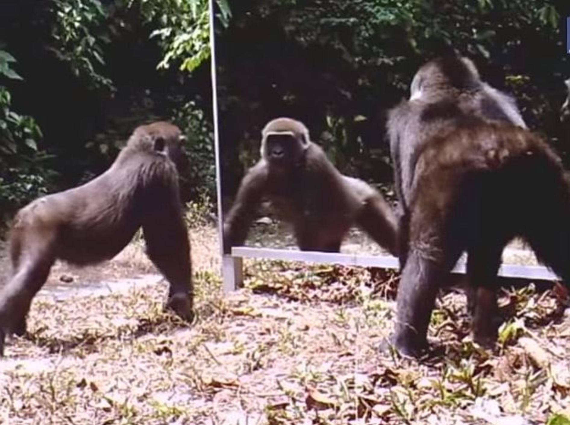 Spannend: Wie reagieren Tiere auf ihr Spiegelbild? – Bild: Youtube / Caters TV