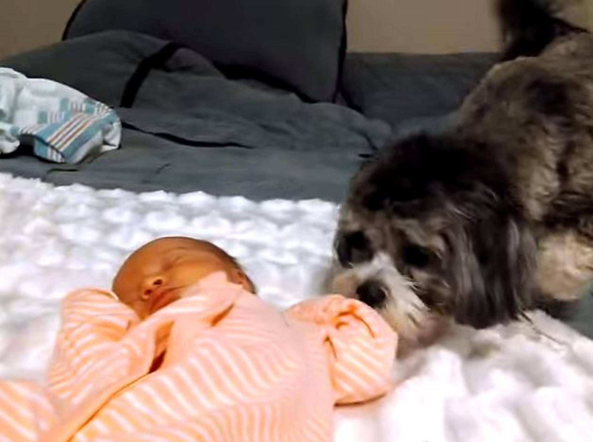 Welpe sieht zum ersten Mal ein Baby – Bild: Youtube / Rumble Viral