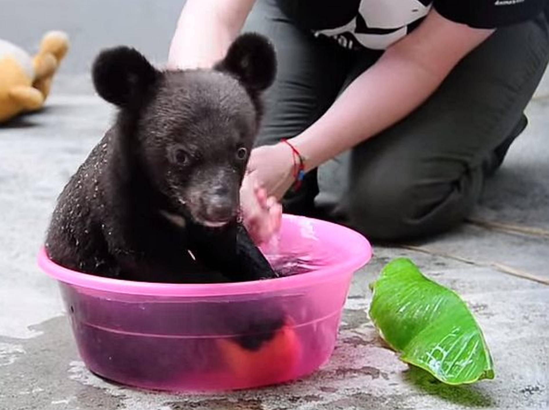 Badezeit bei einem Babybär – Bild: Youtube / Animals Asia