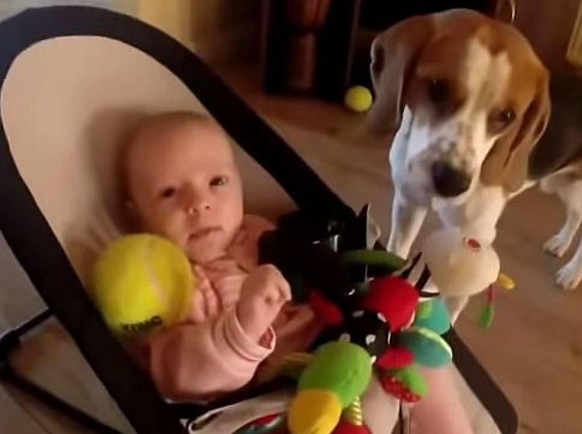 So süß: Beagle mit schlechtem Gewissen will ein Baby trösten – Bild: Youtube / GermanNewzChannel