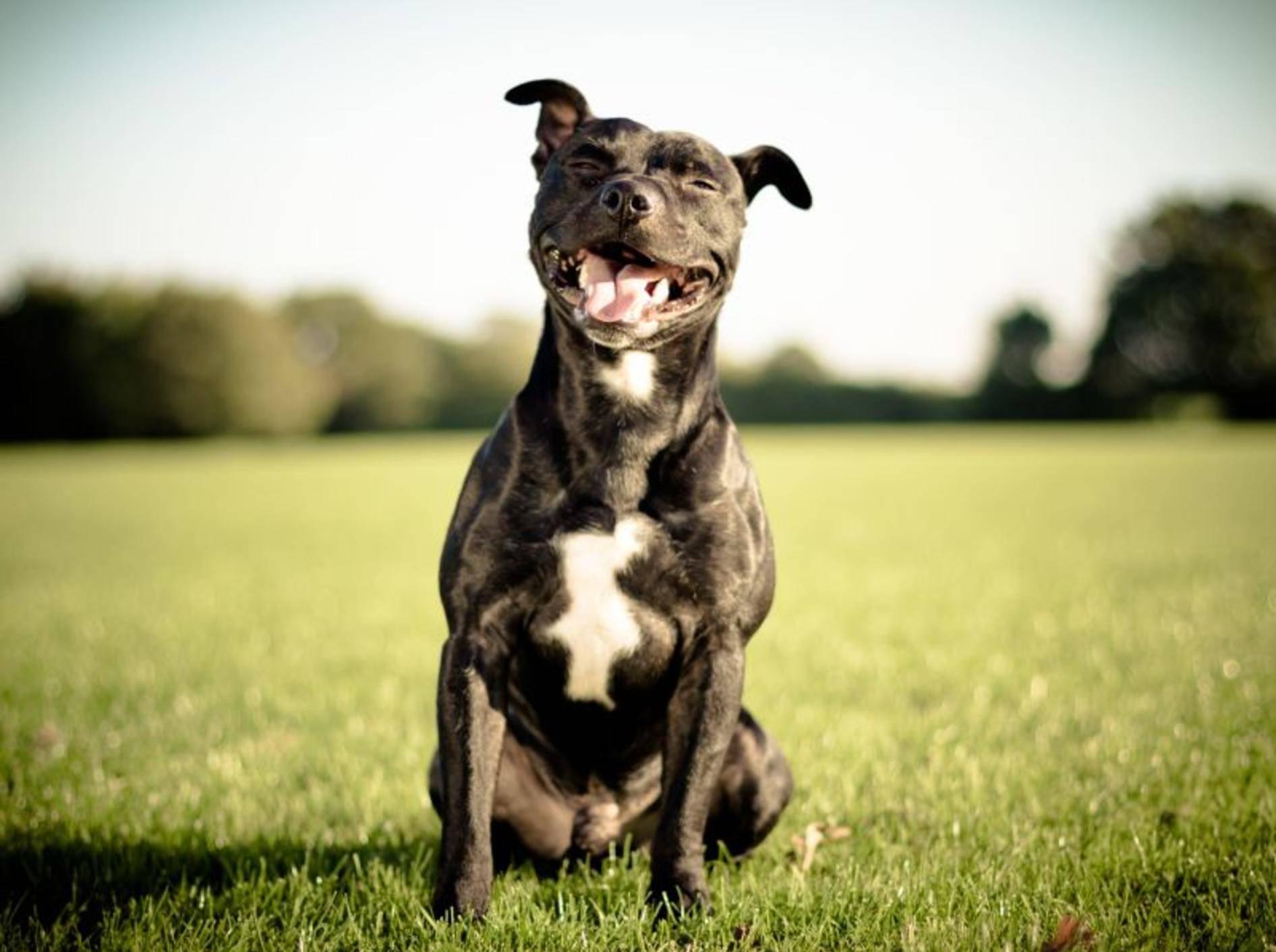Wie verlässlich ist ein Hund? Ein Wesenstest soll Gewissheit bringen – Bild: Shutterstock / arturasker