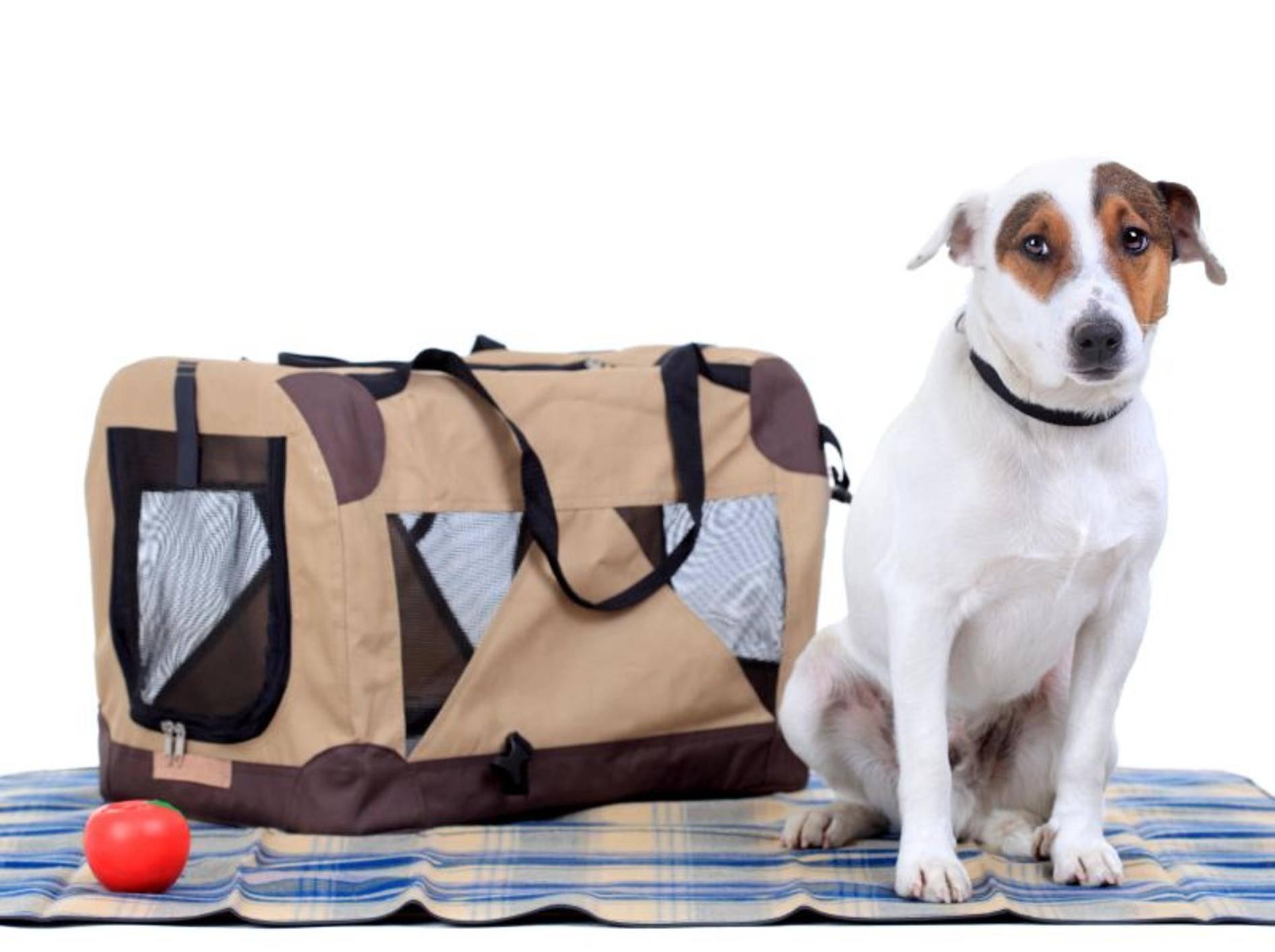 Flugpaten ermöglichen Hunden die Reise ins neues Zuhause – Bild: Shutterstock / Nikola Spasenoski