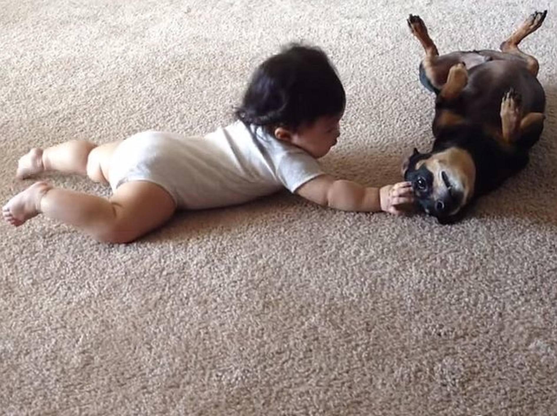 """Hund und Baby: """"Hey du, wollen wir Freunde werden?"""" – Bild: Youtube / Rumble Viral"""