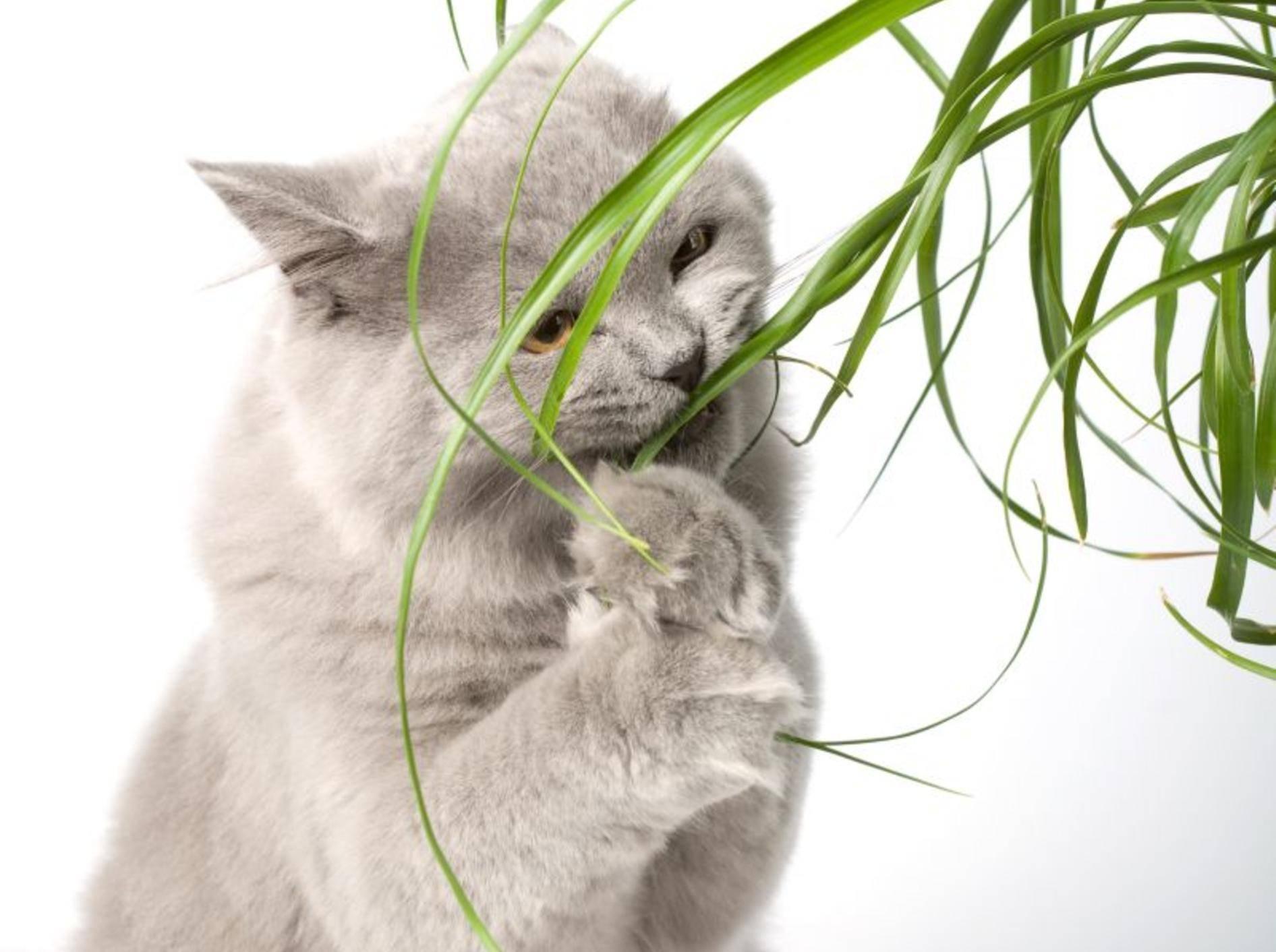 Vorsicht: Viele Pflanzen sind giftig für Katzen – Shutterstock / Olga Miltsova