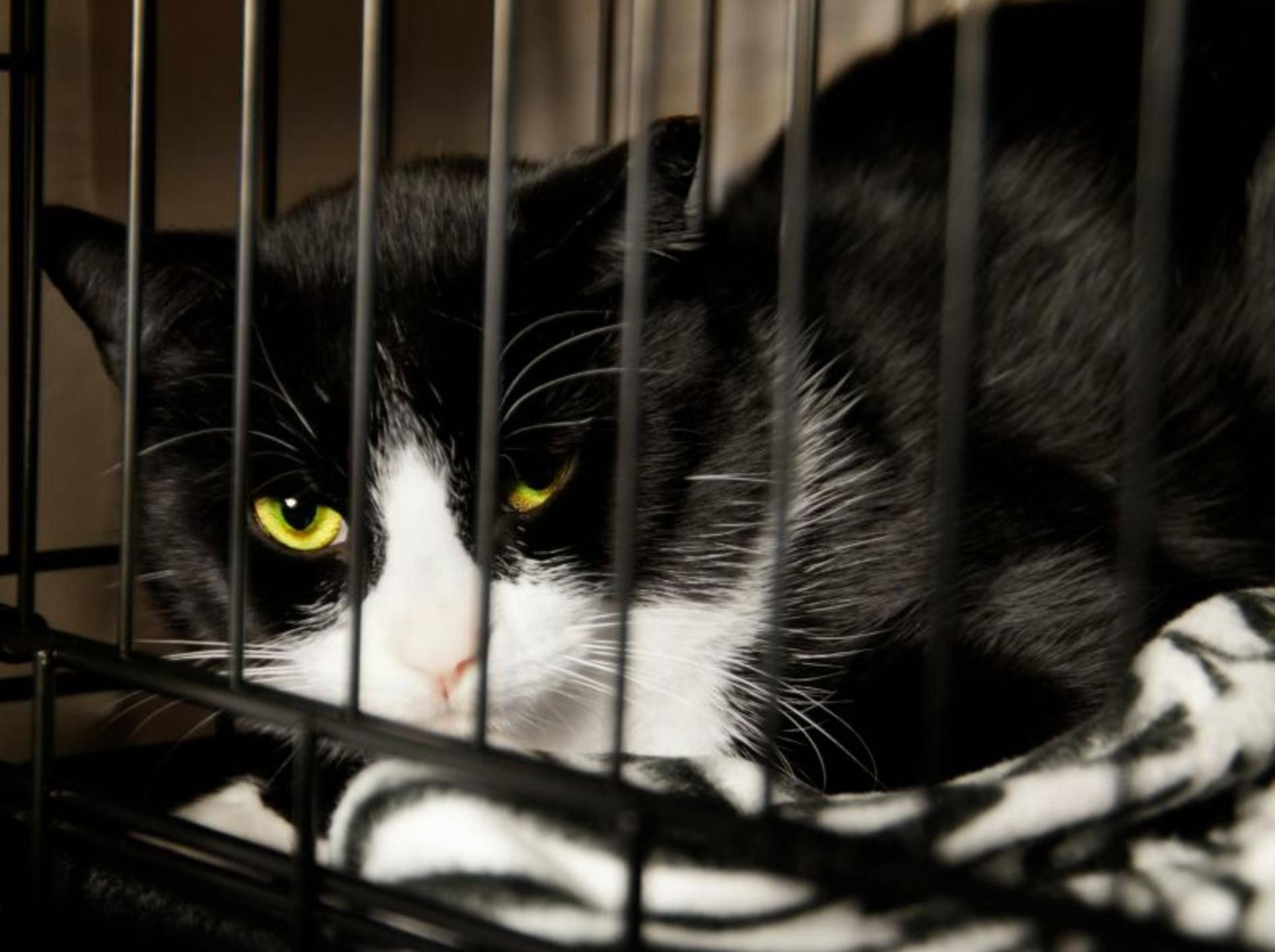 Patenschaften werden oft für schwer vermittelbare Tiere angeboten – Shutterstock / Bruno-Passigatti