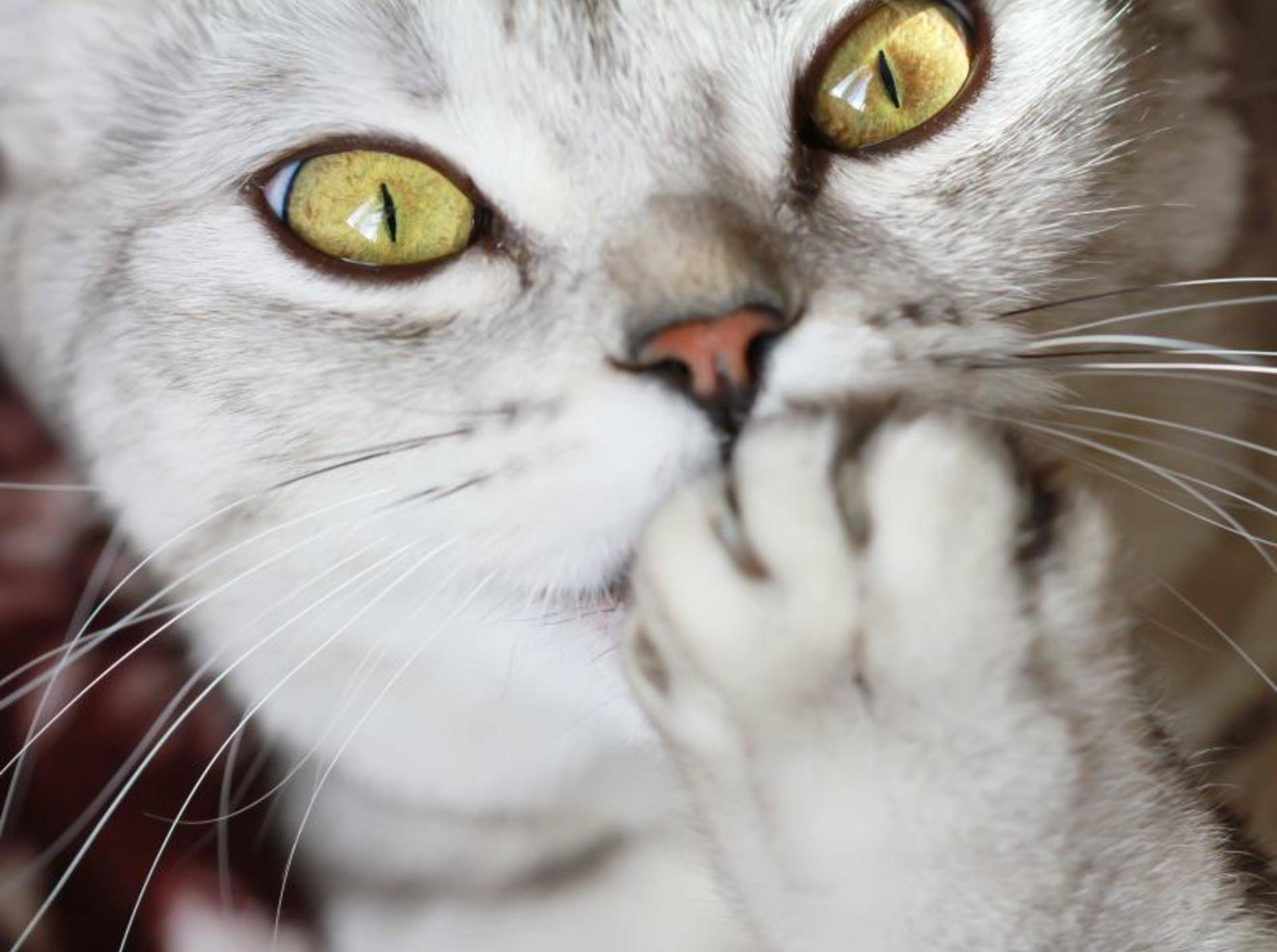 Psychogene Leckalopezie kann zum Beispiel durch Stress verursacht werden – Bild: Shutterstock / turlakova