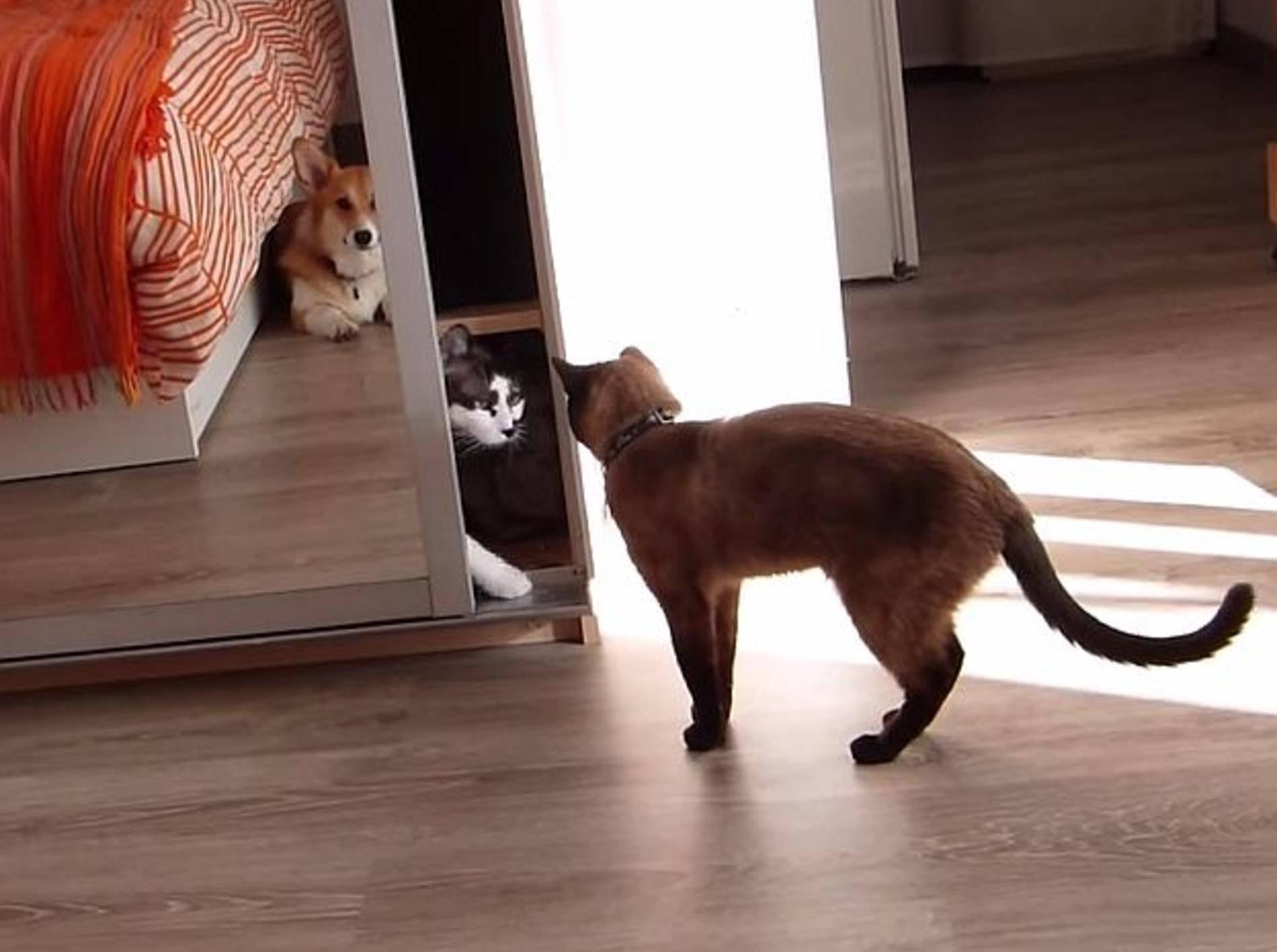 Kluge Katze verschafft sich Privatsphäre – Bild: Youtube / The Fur Monsters
