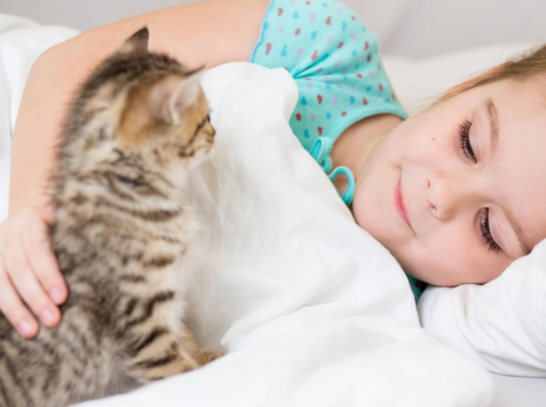 Nachts wird geschlafen: Einige Katzen müssen das noch lernen – Bild: Shutterstock / Oksana Kuzmina