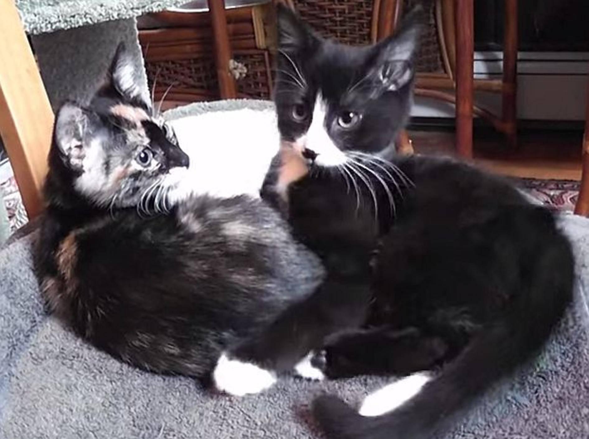 Schöner Videozusammenschnitt: Vom Katzenbaby zur Katze –Bild: Youtube / DrNworb's KitsCats