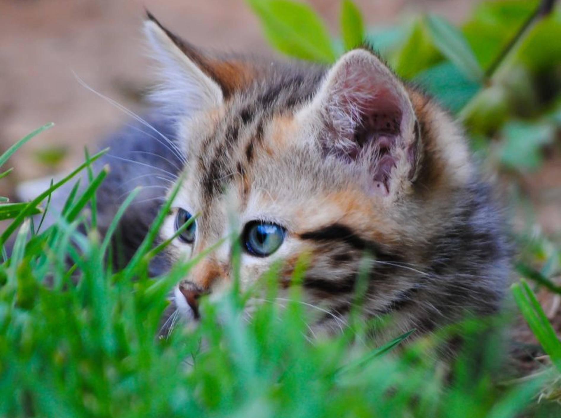 Junge Katzen sind besonders anfällig für Spulwürmer – Shutterstock / Jan Nor Photography