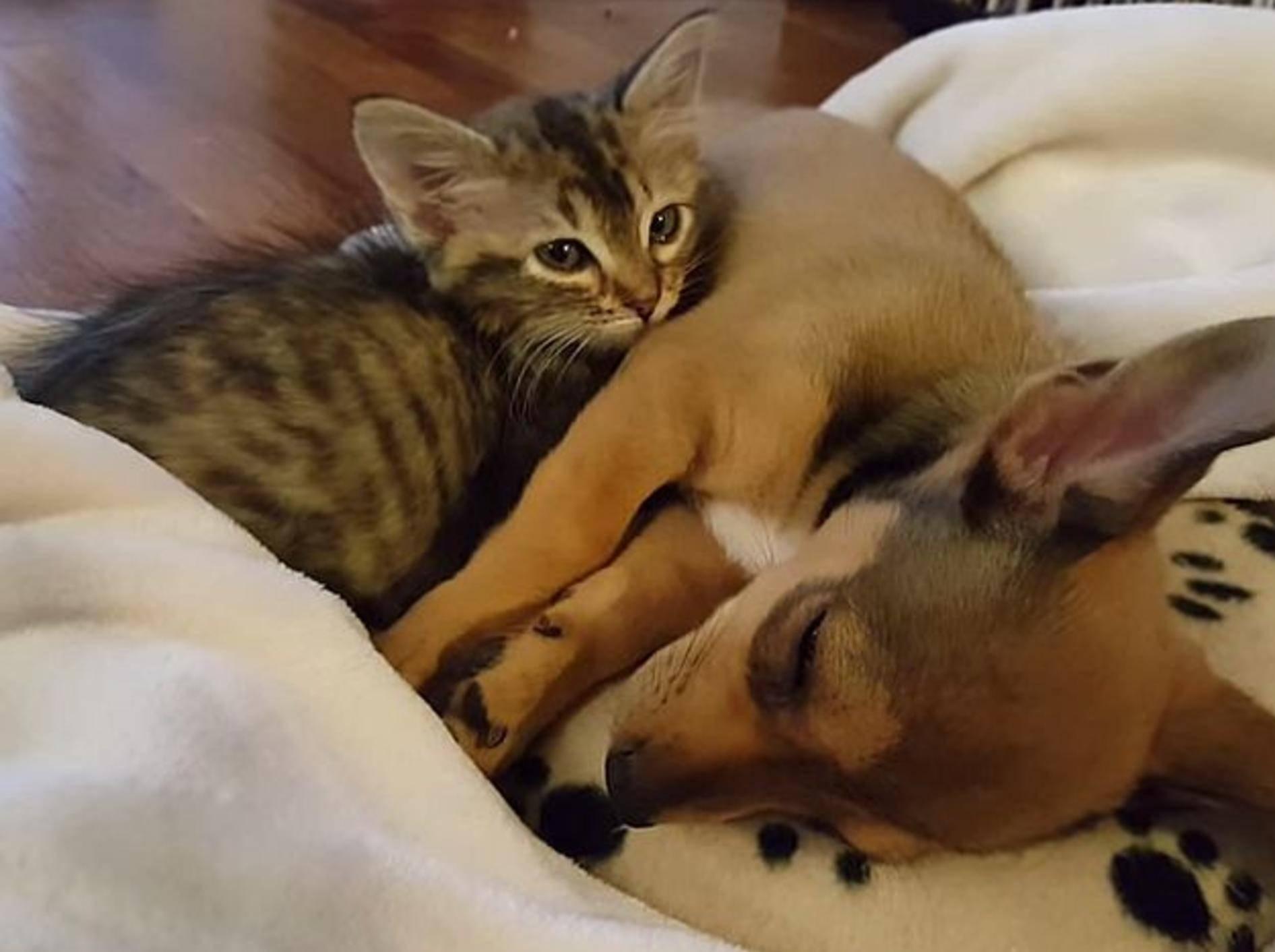 Welpe und Kätzchen: Beste Freunde machen alles zusammen – Bild: Youtube / Chip & Adele