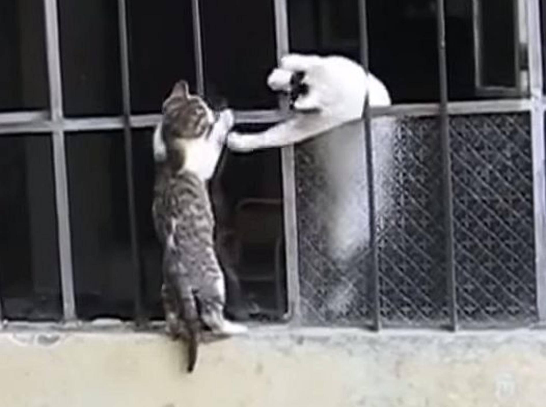 Katzenmama rettet waghalsiges Kitten – Bild: Youtube / Funny & Amazing Planet