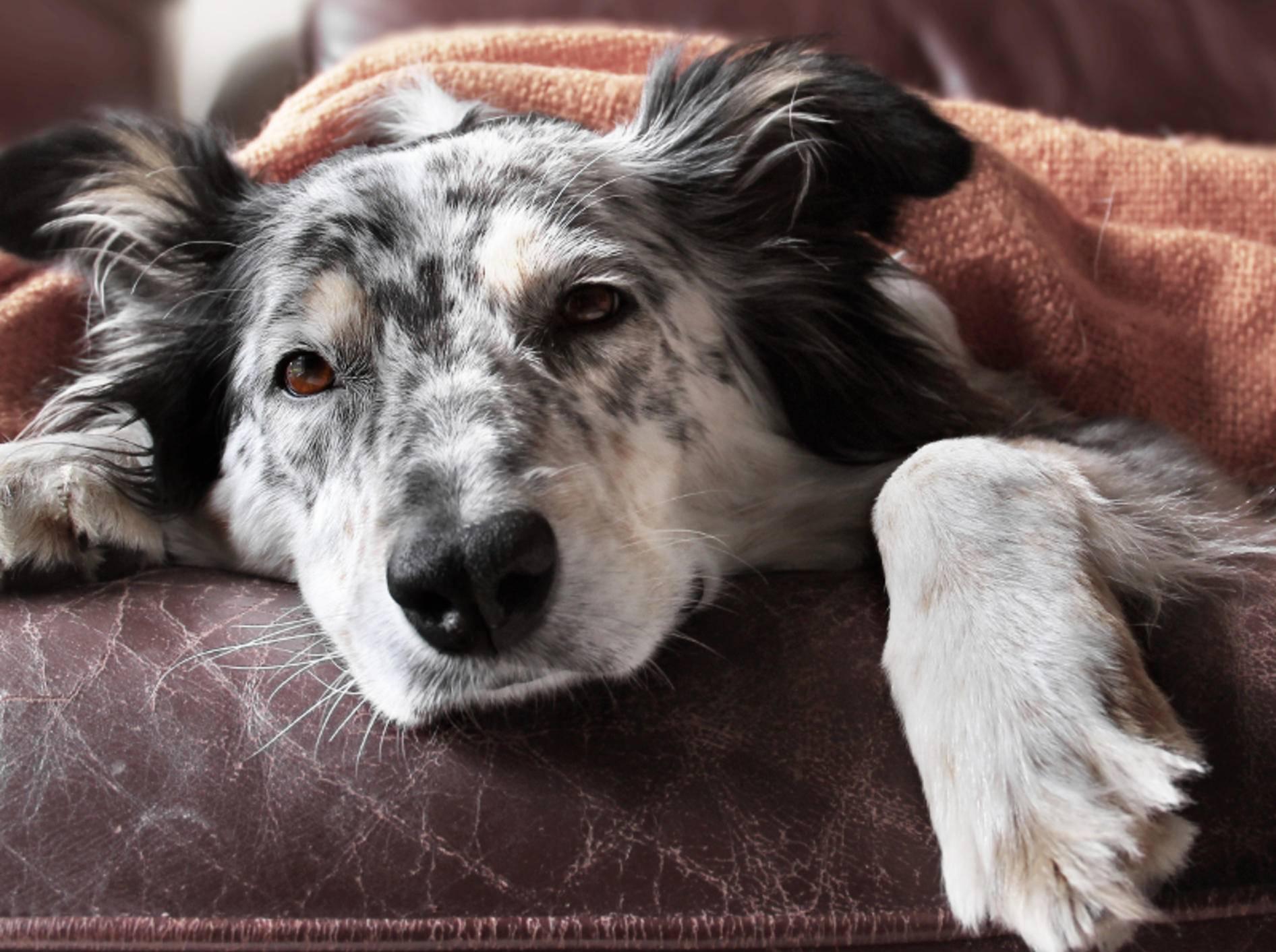 Eine Bauchspeicheldrüsenentzündung muss unbedingt vom Tierarzt behandelt werden – Bild: Shutterstock / Lindsay Helms