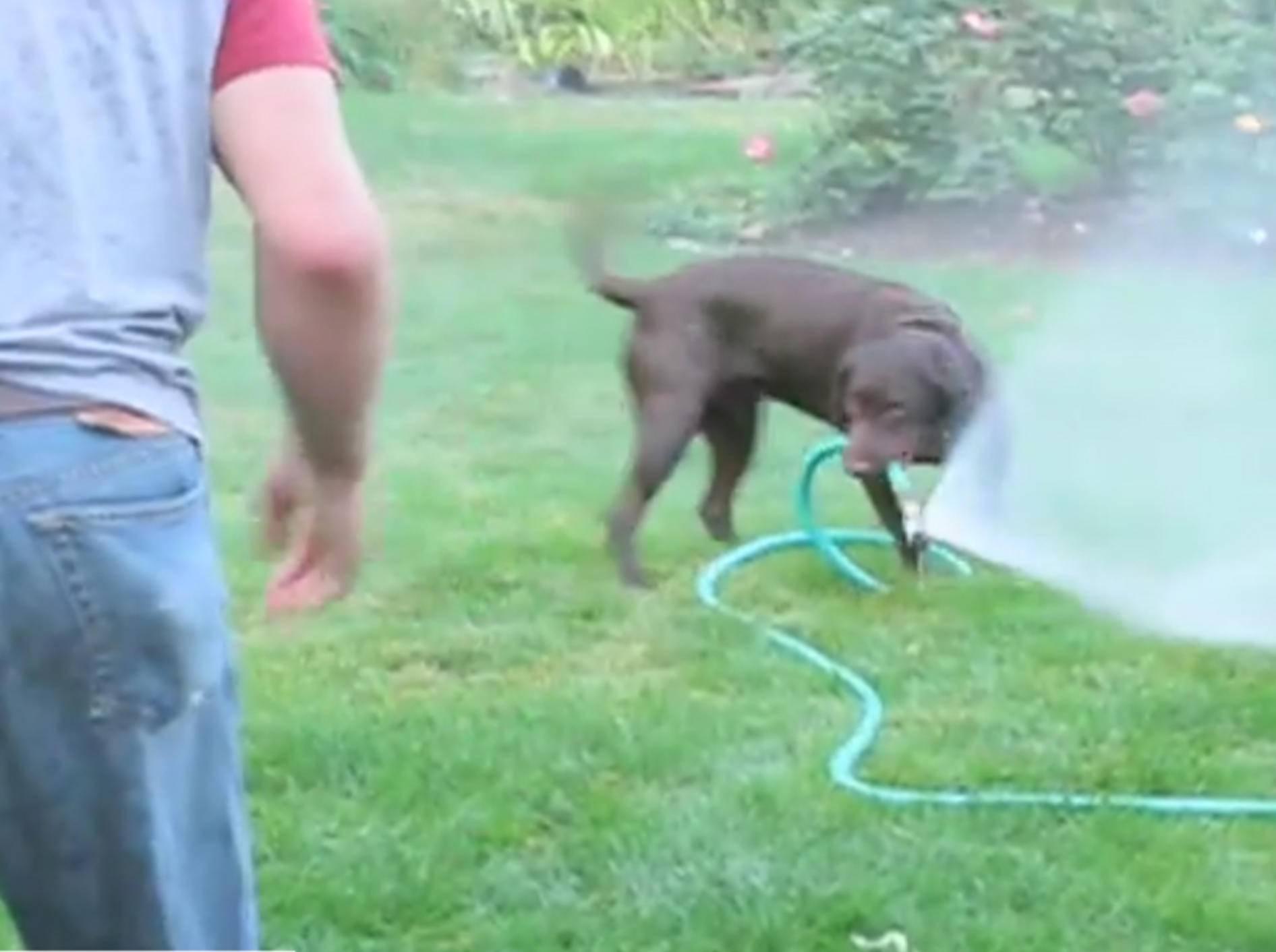 Herrchen mit dem Wasserschlauch zu jagen macht Spaß – YouTube / FunnyFuse
