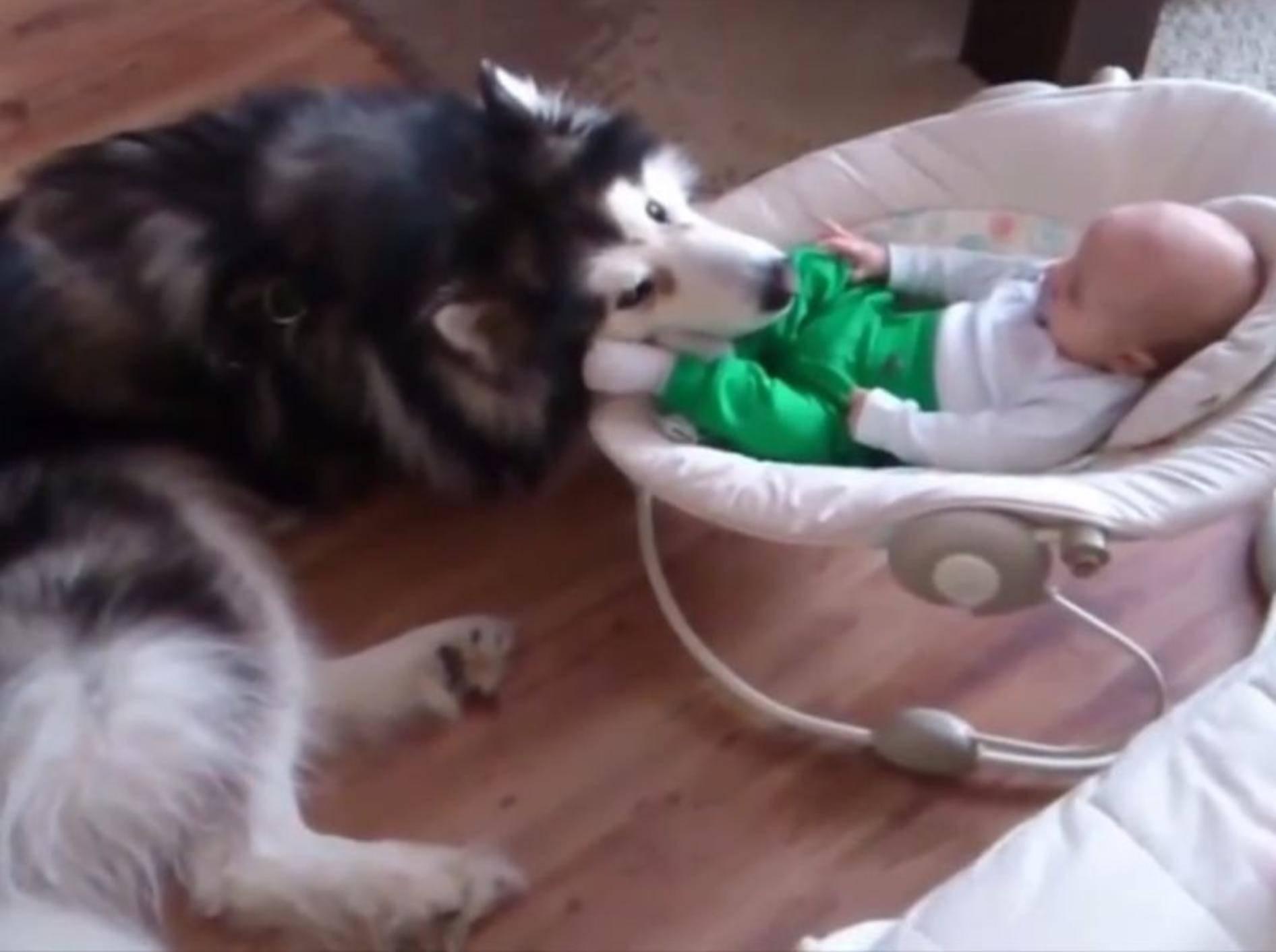 Tierisch gute Freunde: Hund und Baby – YouTube / Rumble Viral