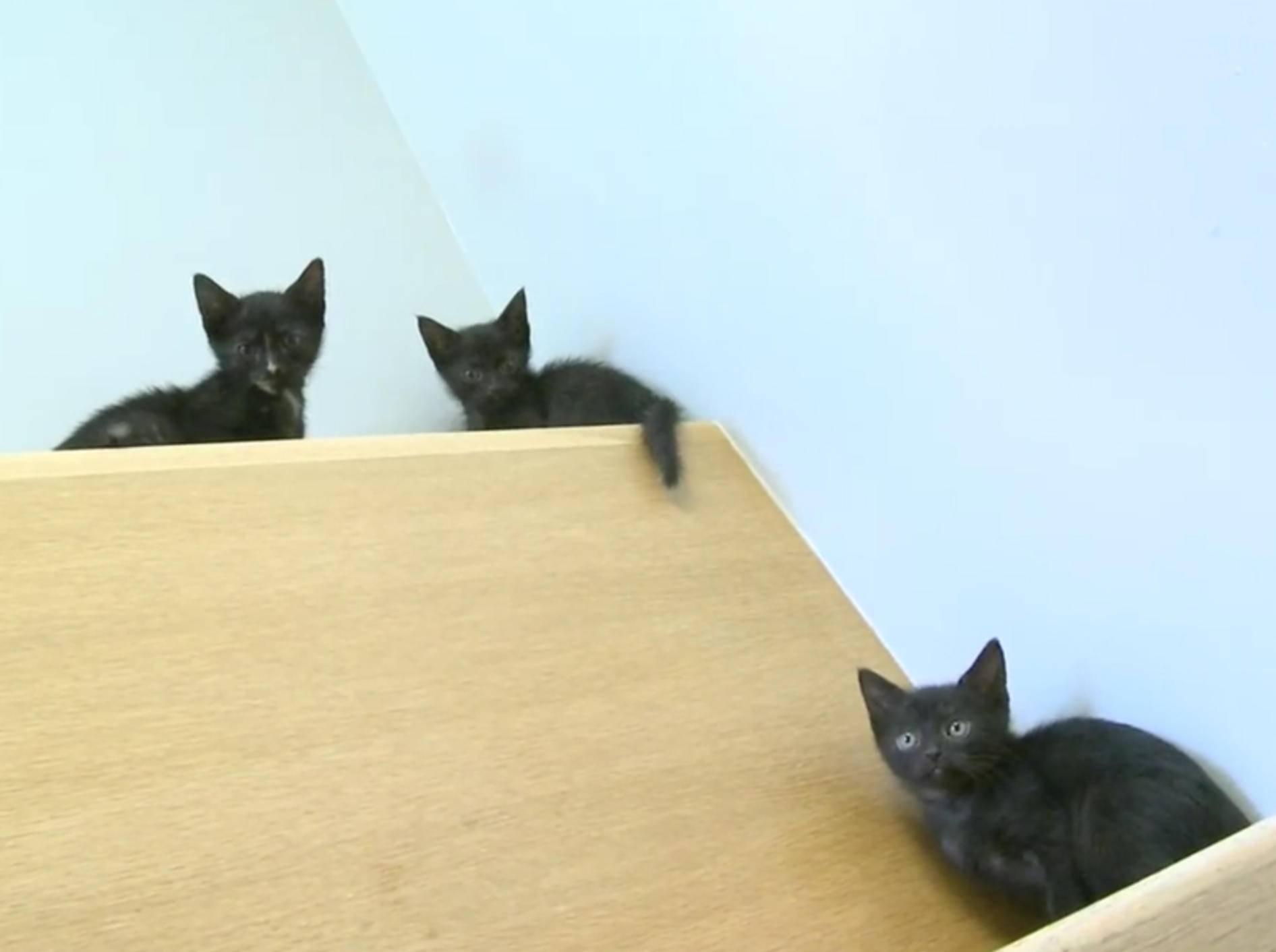 Klettern ist lustig, finden diese Kätzchen – YouTube / The Pet Collective