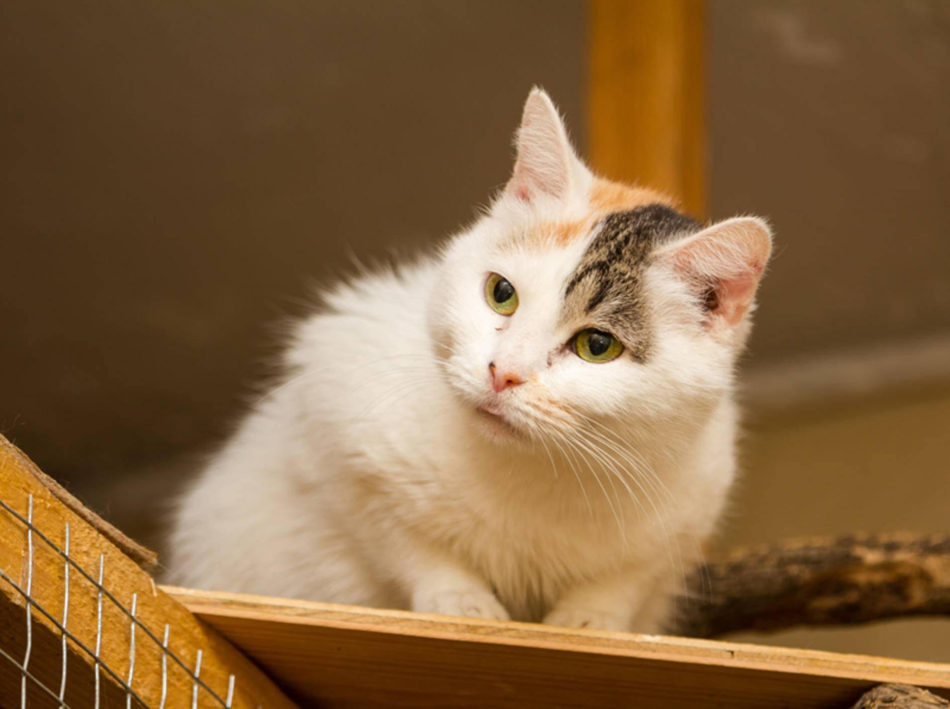 """Süße Tierheimkatze: """"Darf ich mitkommen?"""" – Shutterstock / Andrei Ruchkin"""