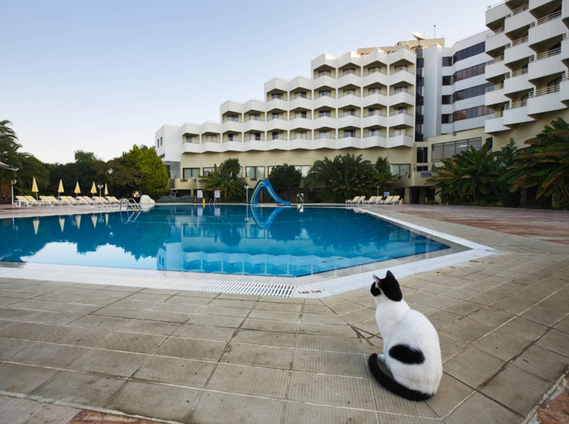 Im Urlaub braucht die Katze besondere Aufmerksamkeit – Shutterstock / Irina Fischer