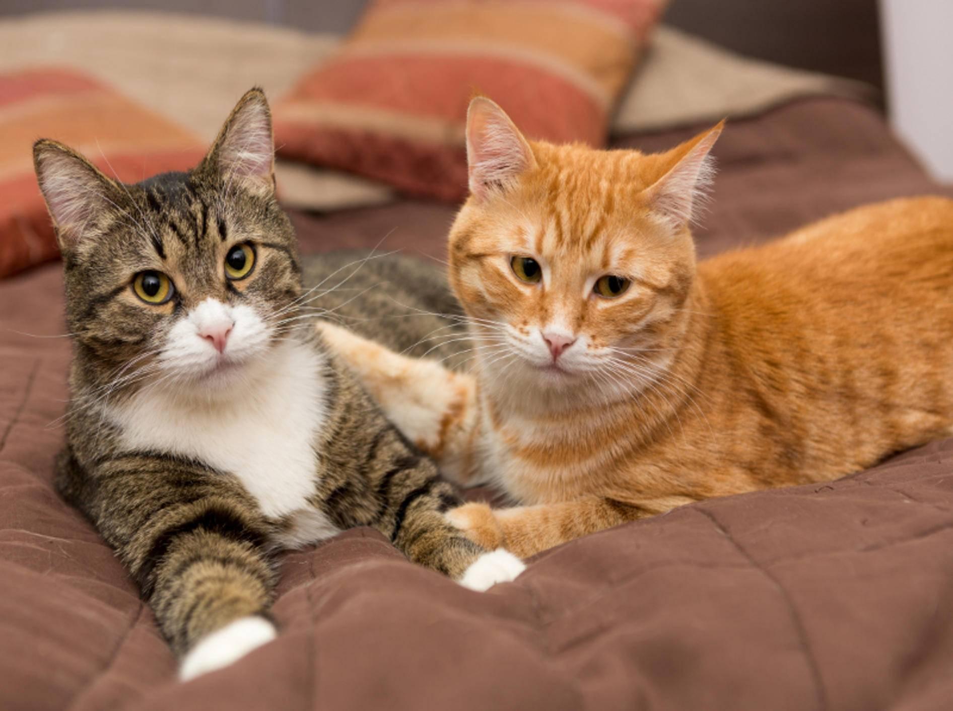 katzen vertragen sich nicht