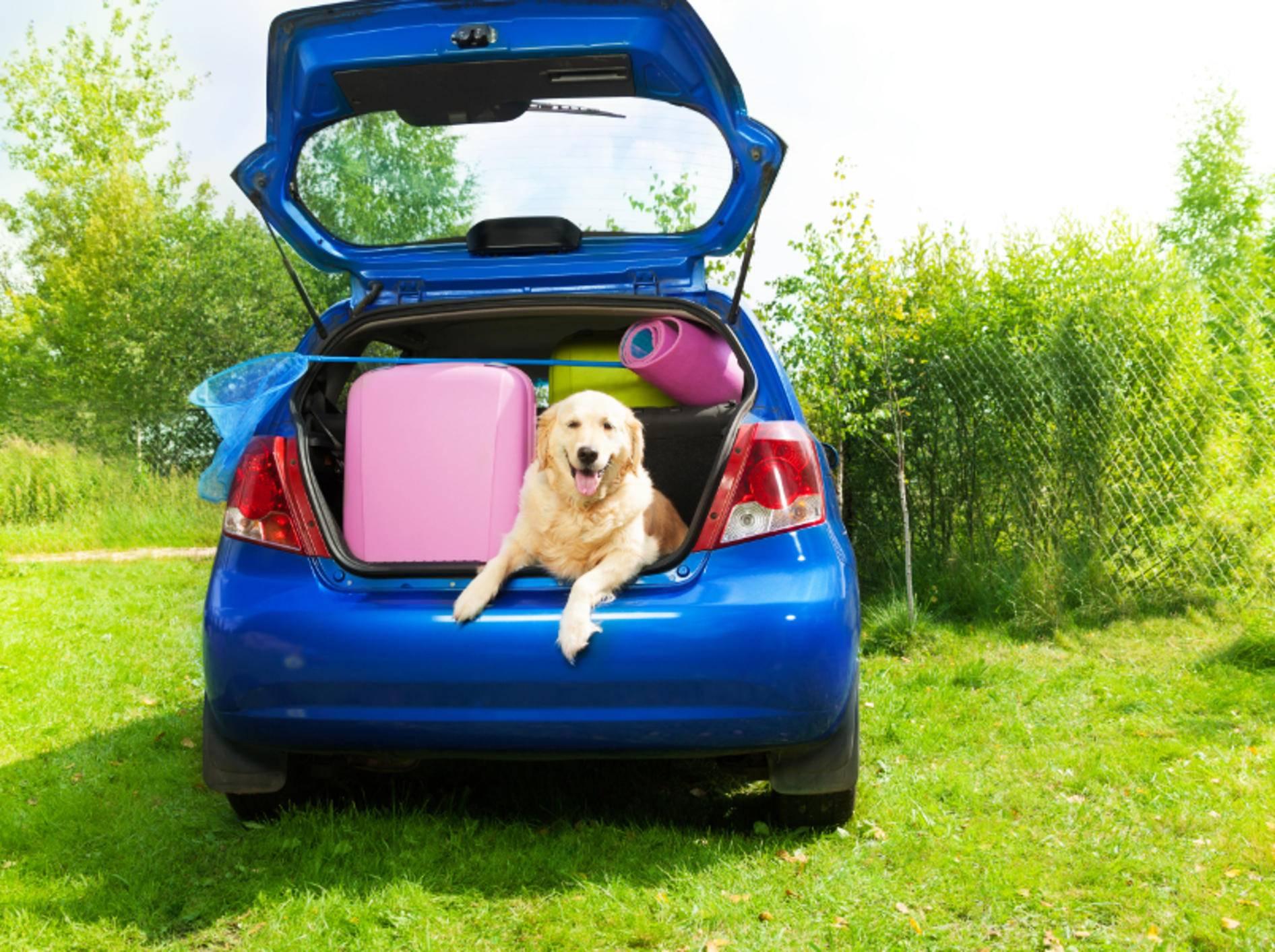 Dieser süße Hund braucht einen EU-Heimtierausweis im Urlaub – Shutterstock / Sergey Novikov