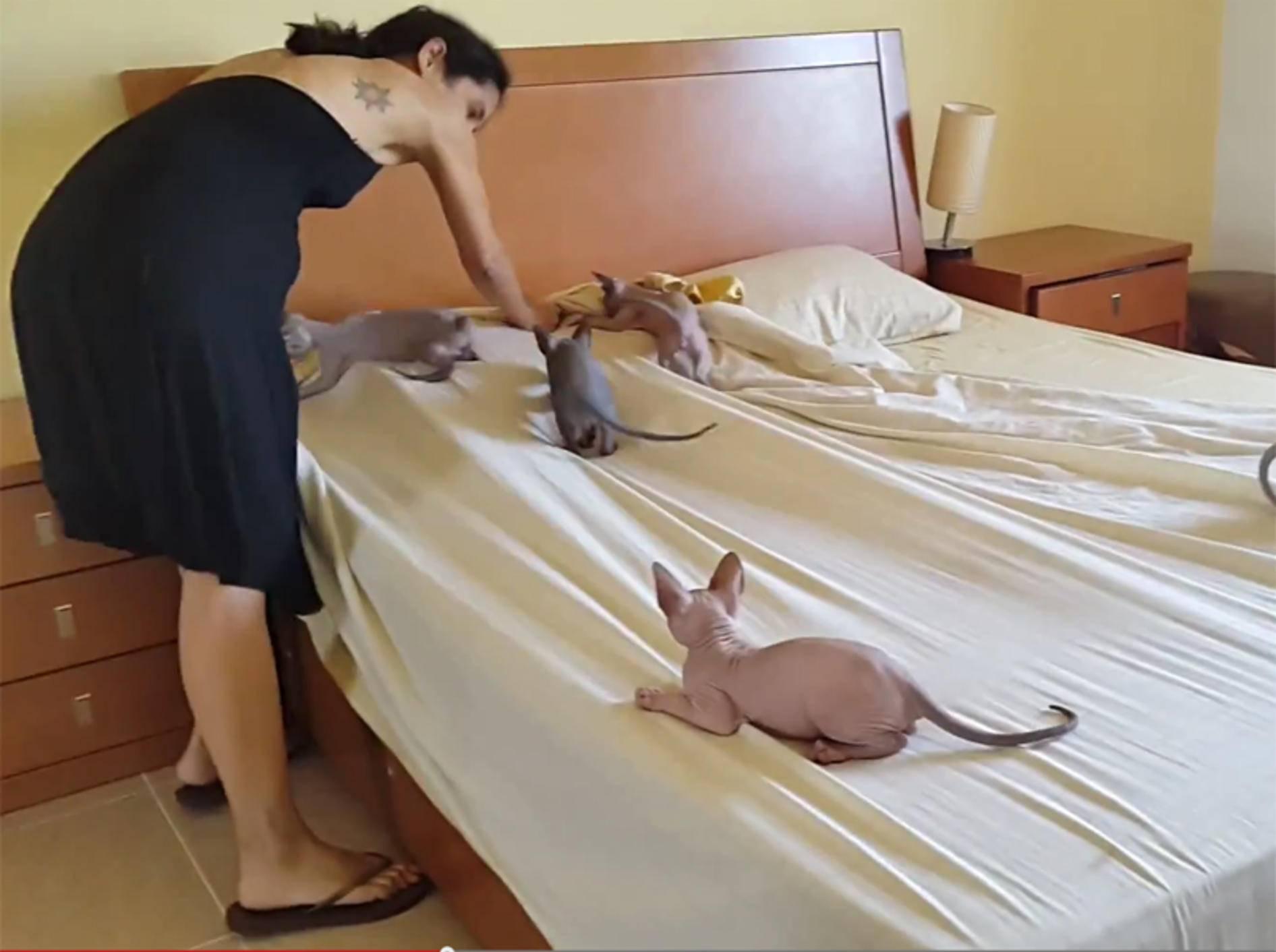 """Freche Sphynx-Katzen: """"Spiel mit uns!"""" – YouTube / Vanda Santos"""