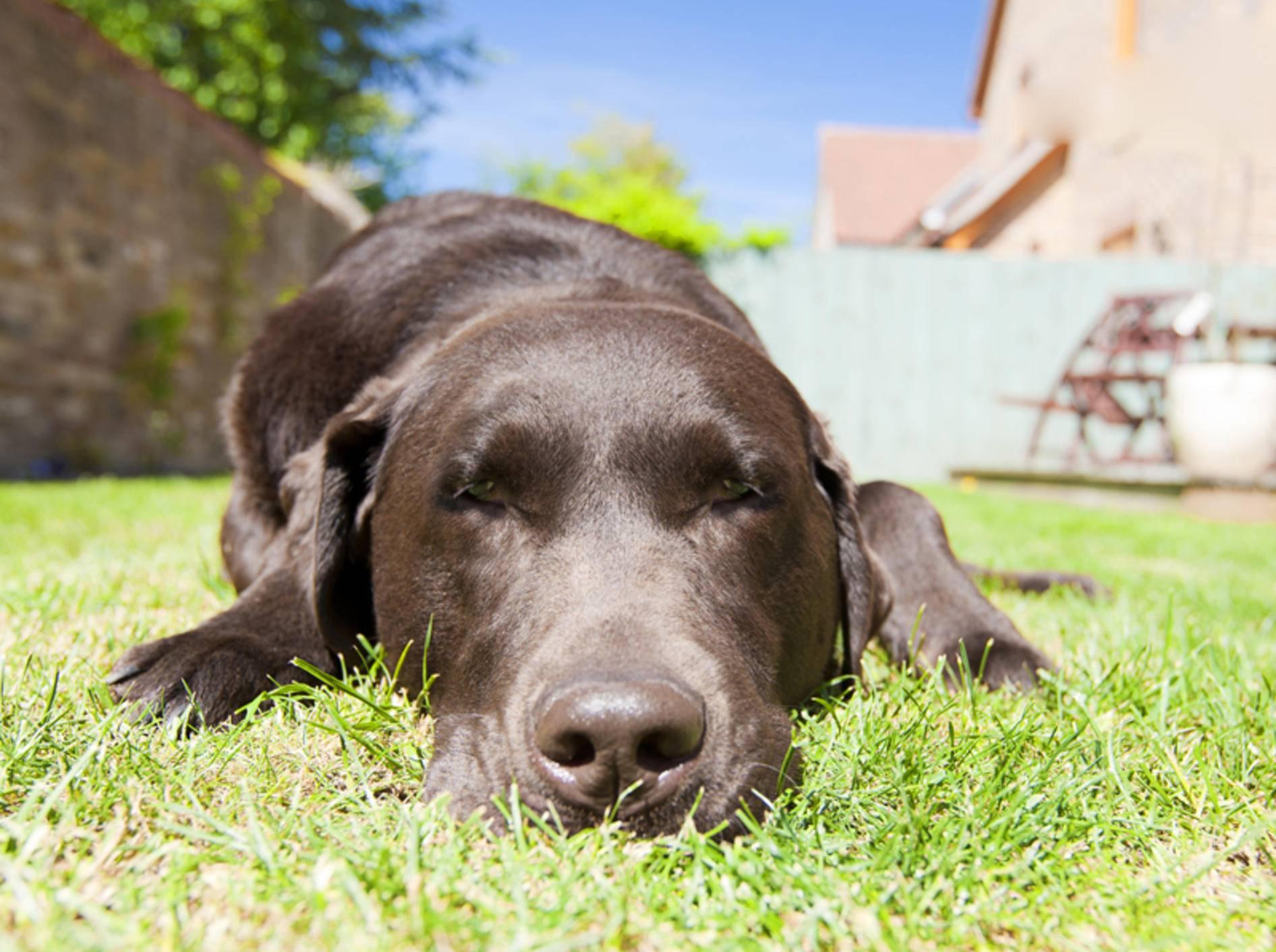 In der Sonne ist es zwar schön, aber für einen Hund nicht ungefährlich – Shutterstock / JPagetRFPhotos