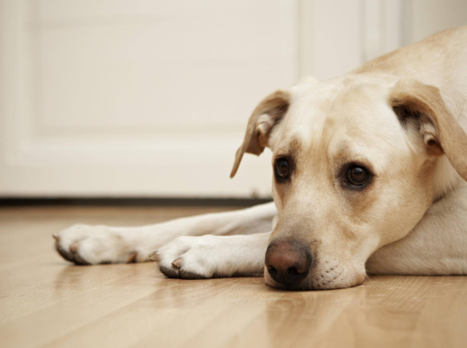 Ein gestresster Hund braucht Ruhe – Bild: Shutterstock / Jaromir Chalabala