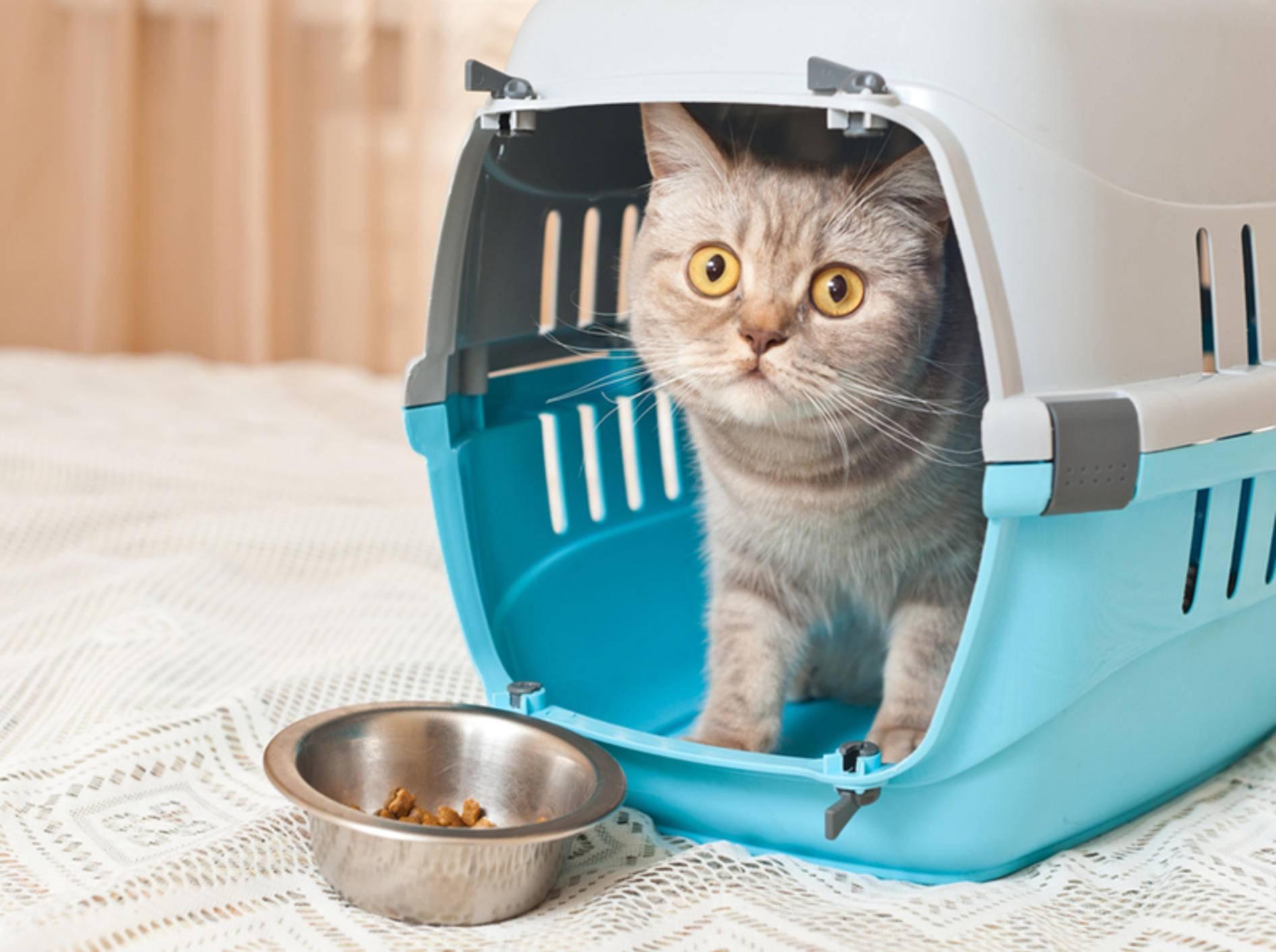 Die Urlaubsfrage: Transport zur Katzenpension oder doch lieber ein Katzensitter zu Hause? – Bild: Shutterstock / photo_master2000