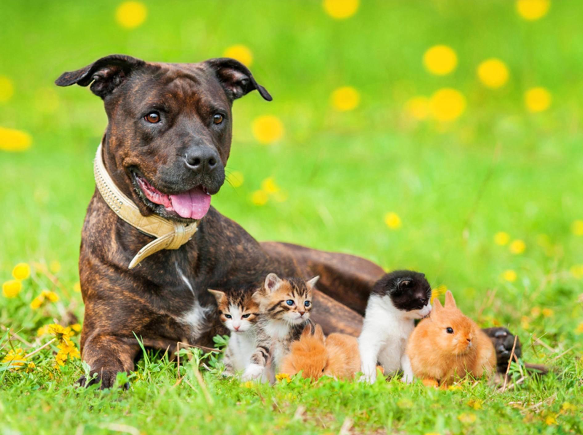 Hund, Katze oder Kleintier: Welcher tierische Freund ist für Sie perfekt? – Shutterstock / Rita Kochmarjova