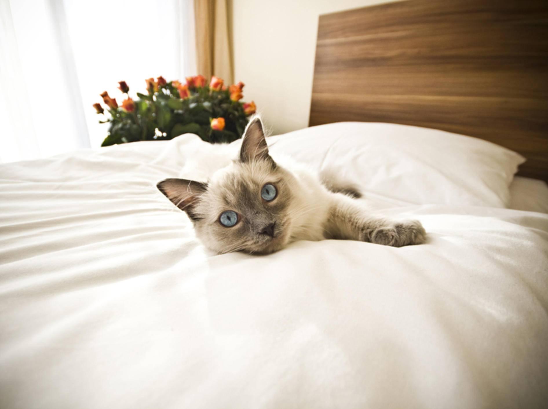 Die Katze darf nicht überall mit ins Hotel – Shutterstock / Bartosz Zakrzewski