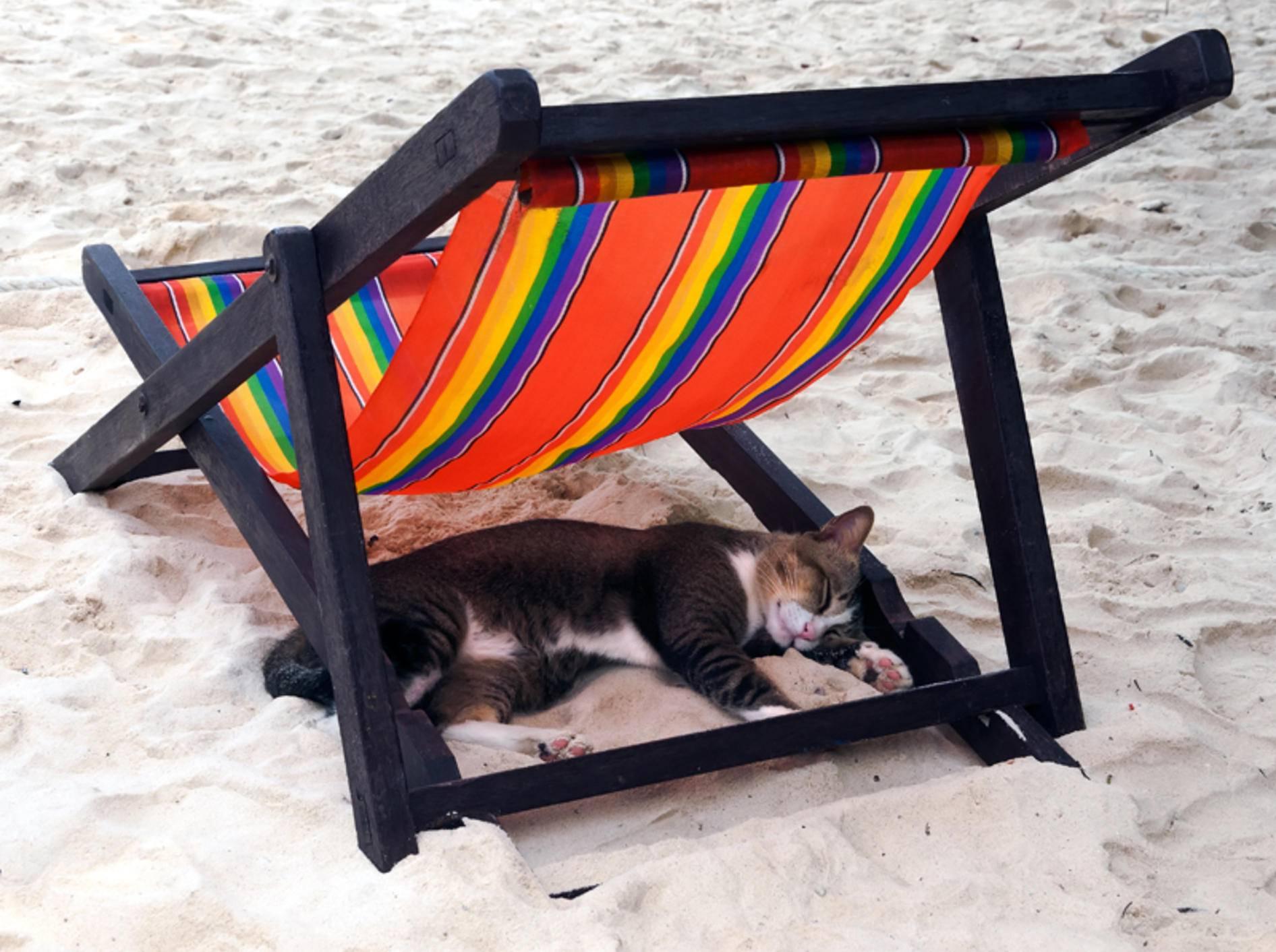 Urlaub mit Katze kann schön entspannend sein – Shutterstock / Papik
