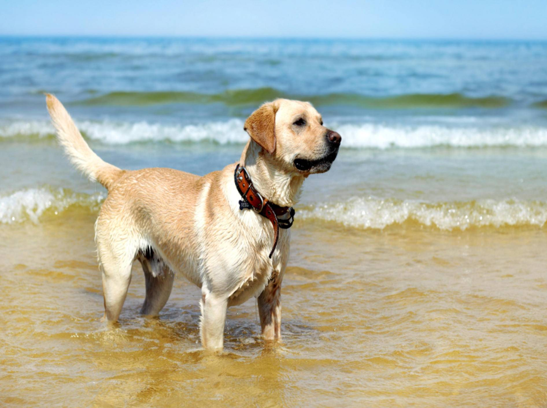 Bestens vorbereitet macht der Urlaub am Hundestrand besonders Spaß – Shutterstock / MaraZe