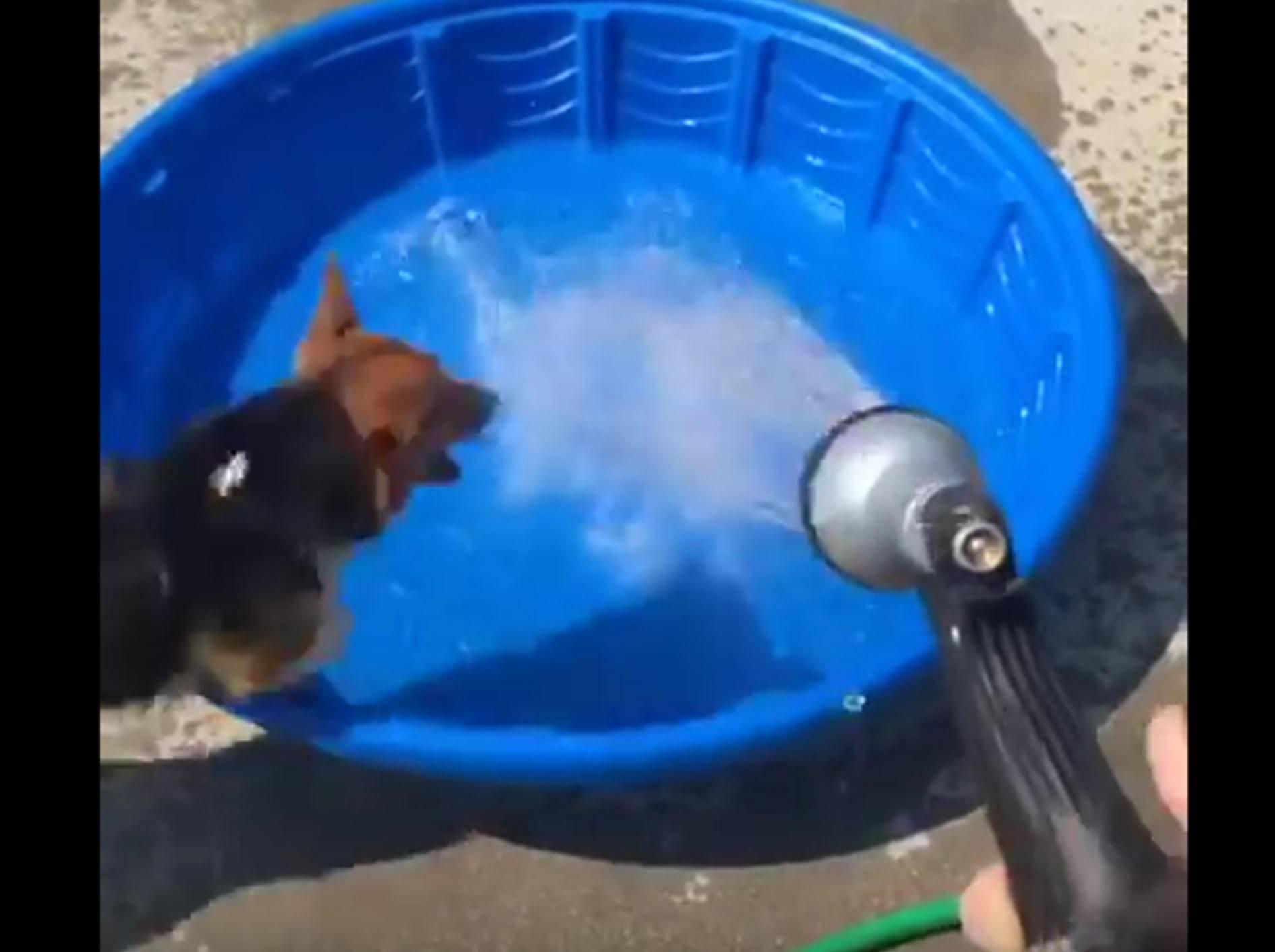 Flinker Corgi jagt Wasserstrahl – Bild: YouTube / IWafflezI