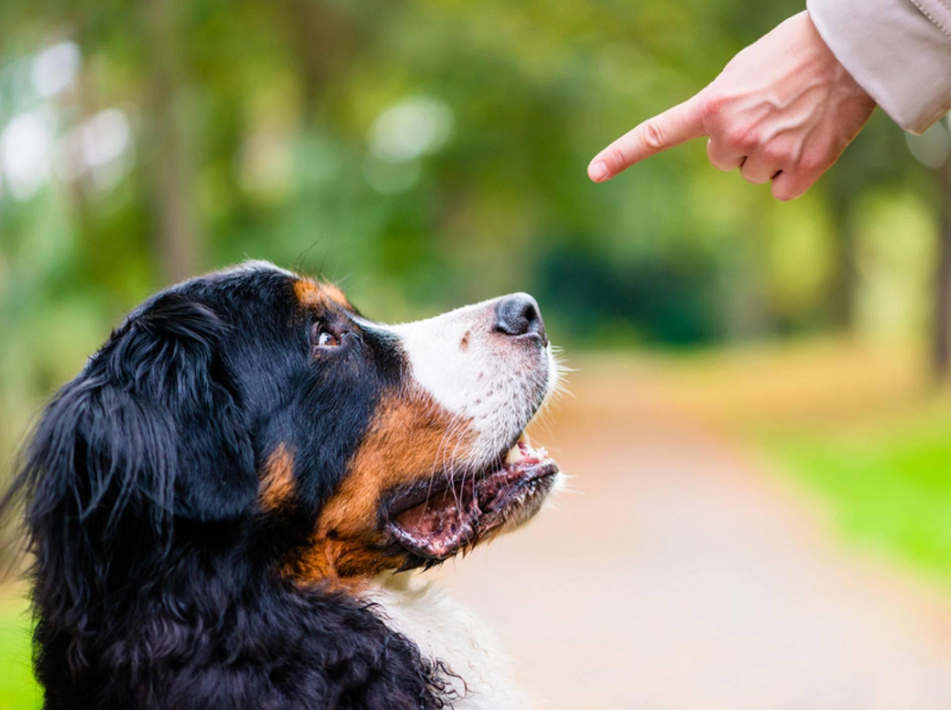 Der Gehorsam Ihres Hundes wird beim Wesenstest geprüft – Bild: Shutterstock / Kzenon