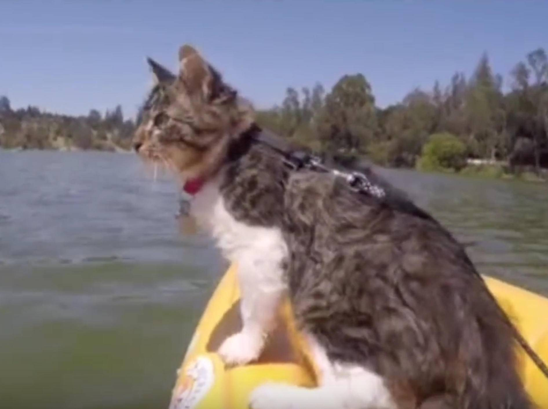 Katze Rosie auf Kajak-Tour – Bild: YouTube / Lilothehusky