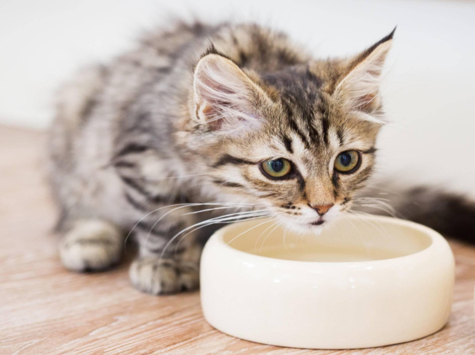 Kleine Kätzchen müssen gut erzogen werden – Shutterstock / Pshenina_m