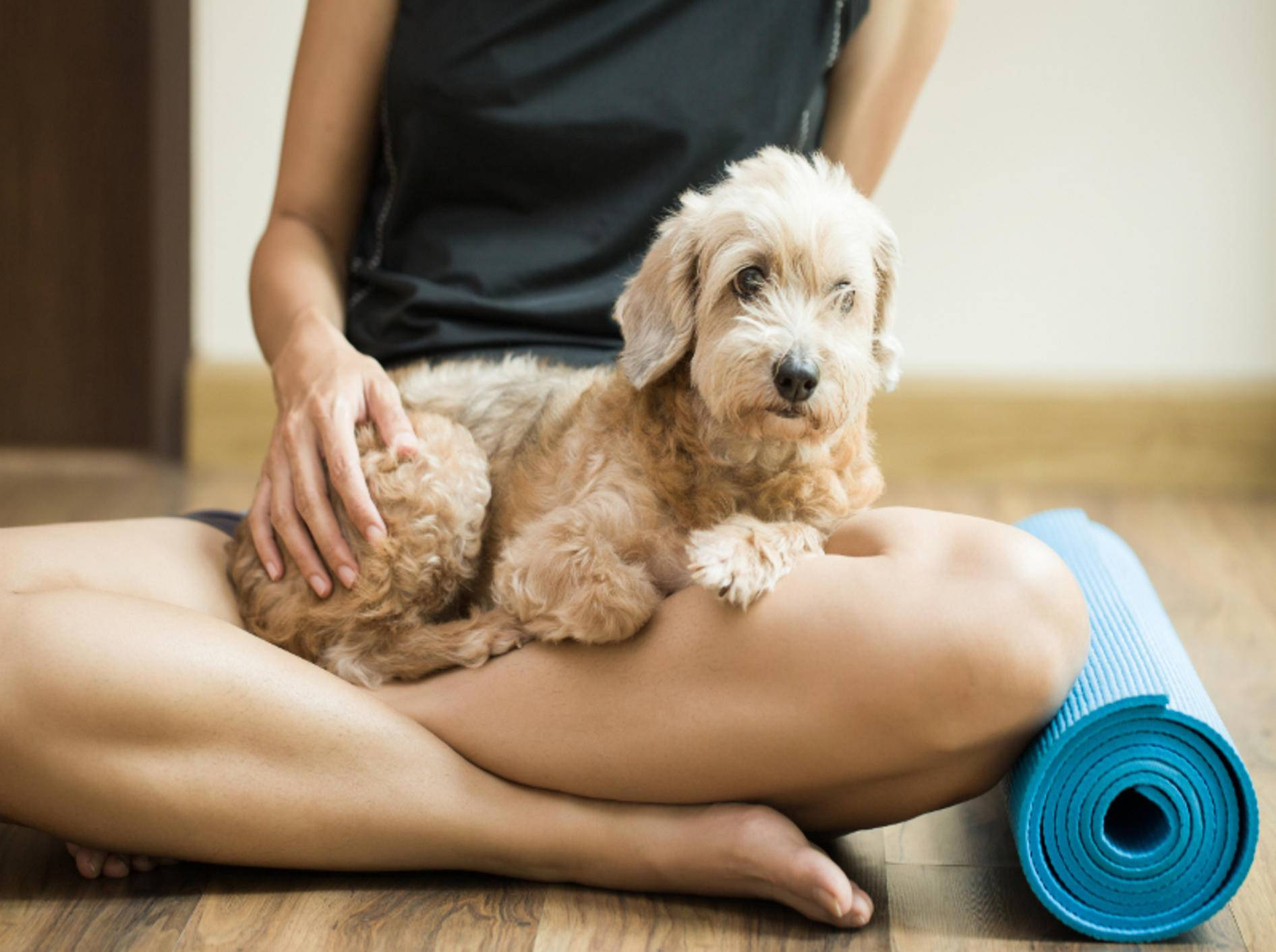 Ommm! Doga ist Entspannung pur für Hund und Halter – Shutterstock / Chutima Chaochaiya