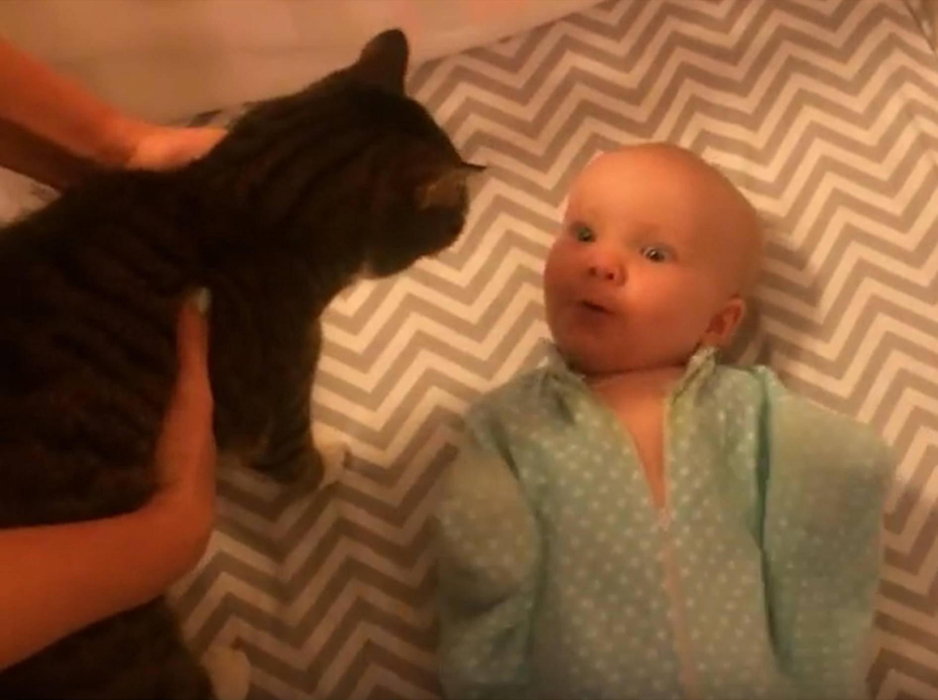 """""""Ui, eine Katze!"""", staunt das süße Baby – YouTube / Merkley Family"""