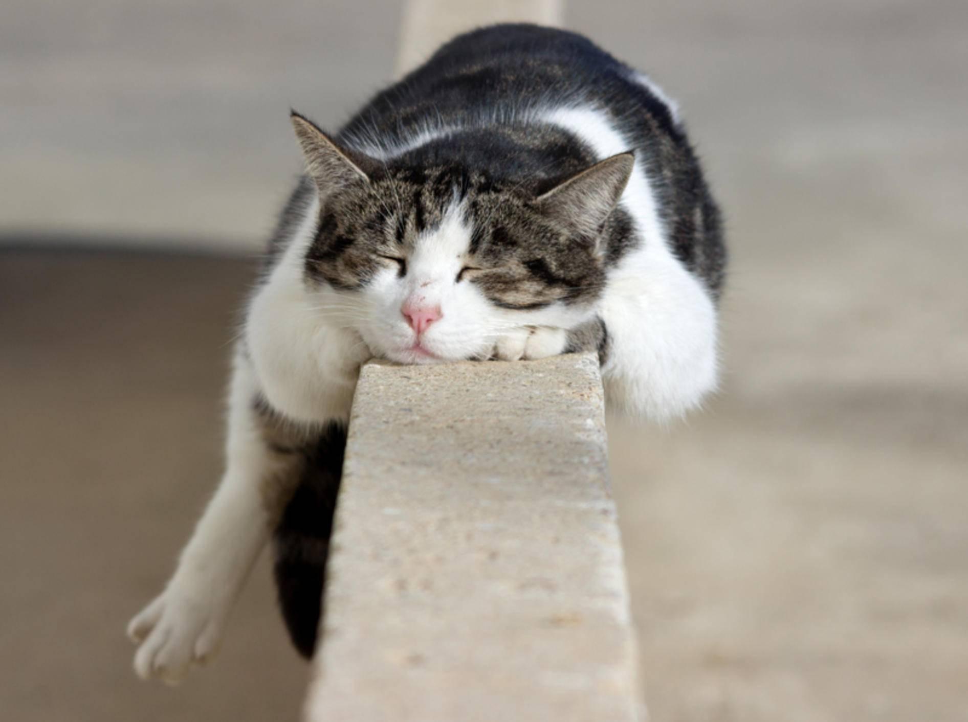 Schlafplätze für Katzen sind nicht immer auf den ersten Blick gemütlich – Shutterstock / Vincenzo Iacovoni