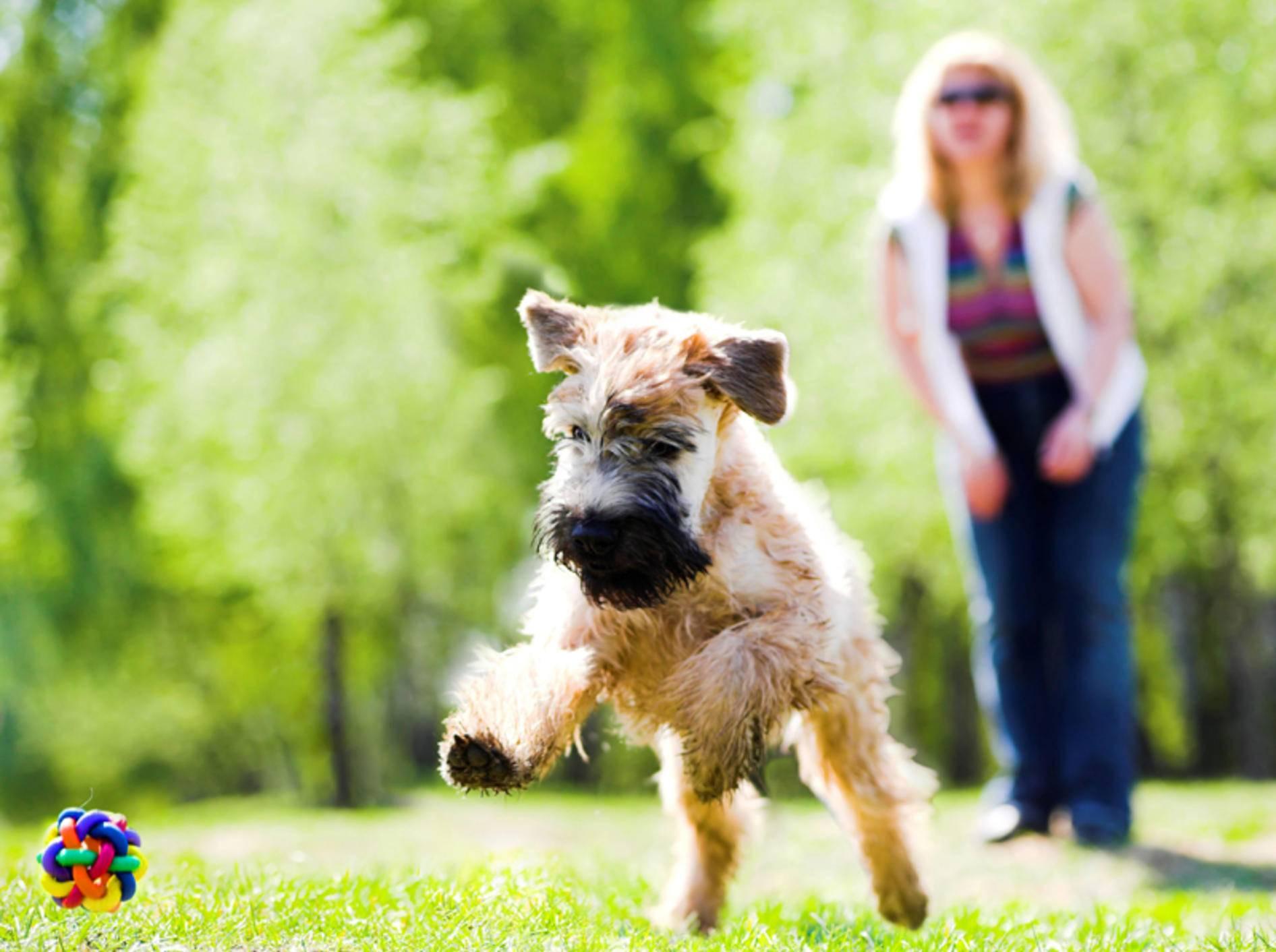 """""""Hui, das macht Spaß!"""": So sehen glückliche Hunde aus – Shutterstock / Denis Babenko"""