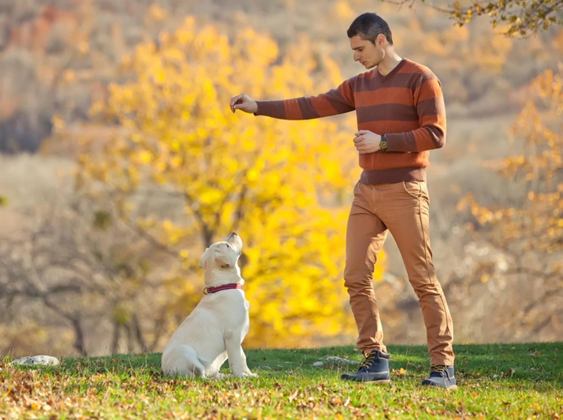 Rituale zwischen Mensch und Hund schaffen Vertrauen und Sicherheit – Shutterstock / Nina Buday