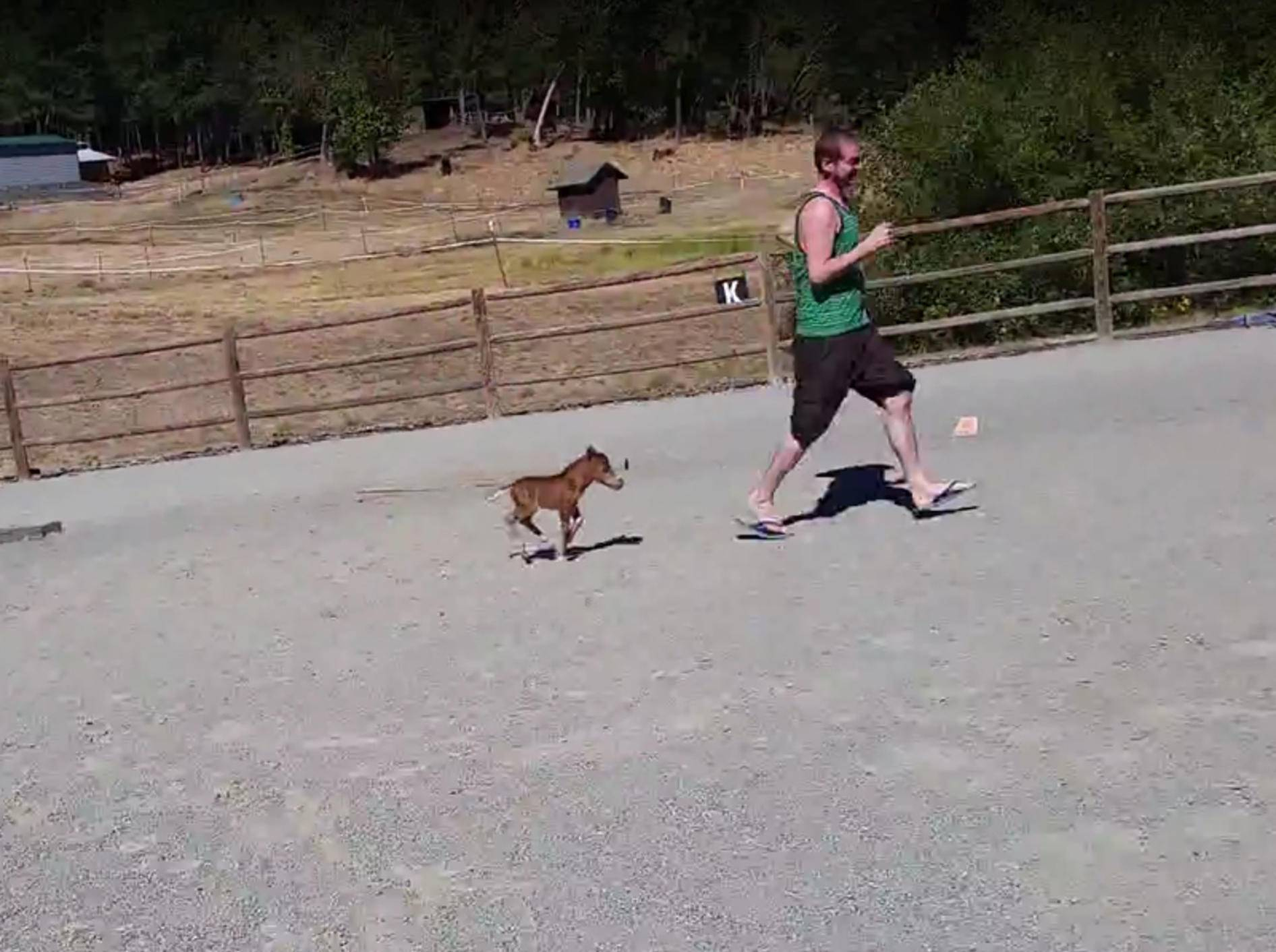 Das winzige Fohlen versucht, den Mann zu fangen – YouTube / Sterling Bartow